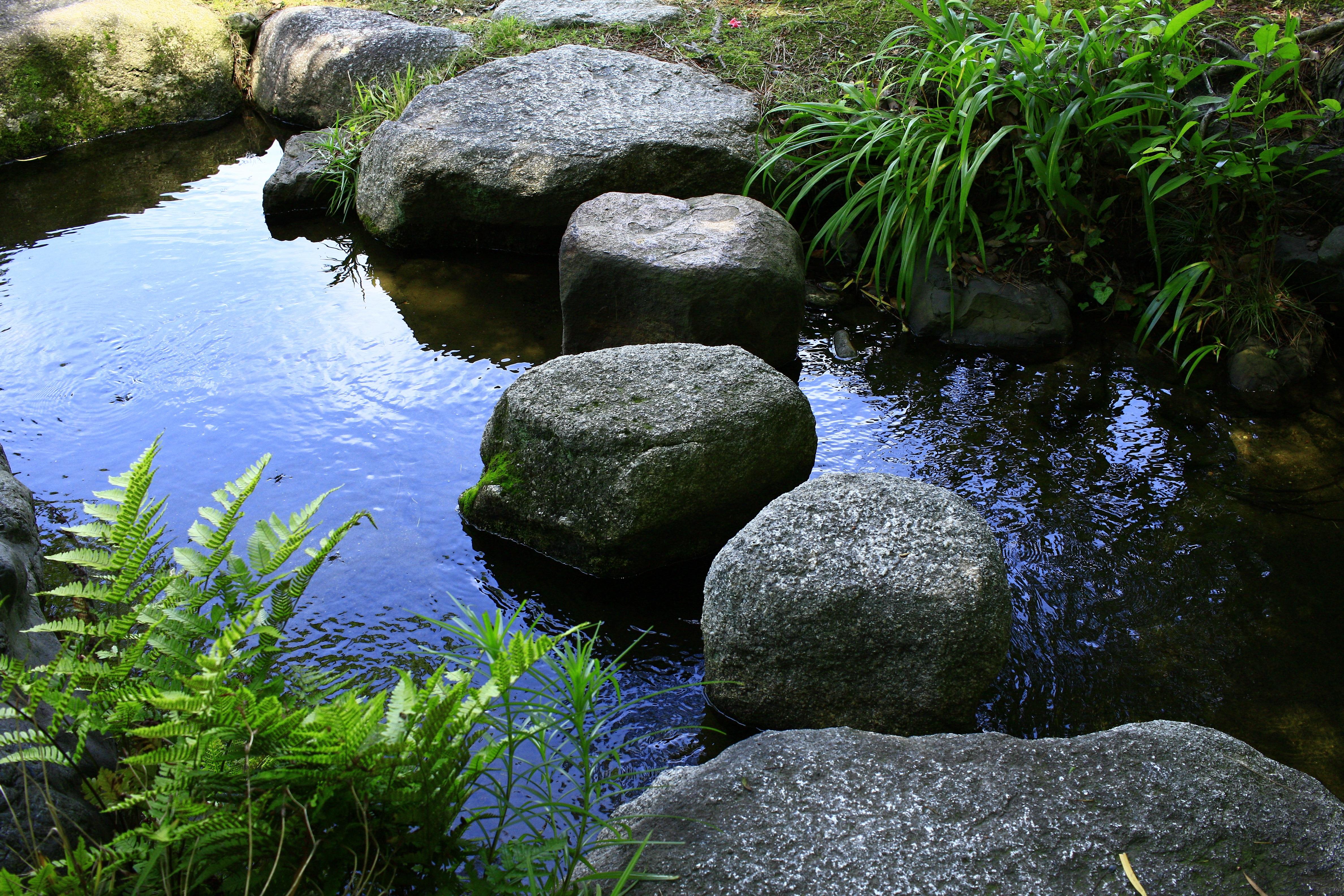 Gratis billeder : landskab, træ, natur, græs, klippe, blad, blomst ...