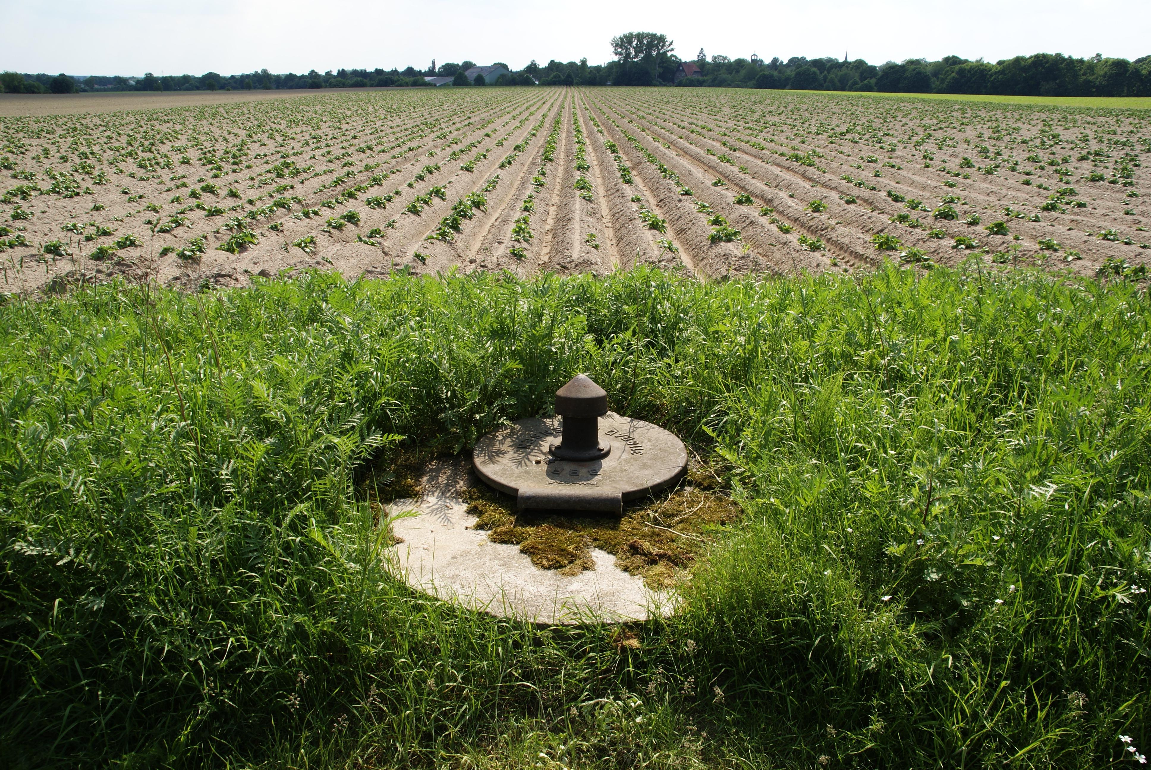 Fotos gratis paisaje rbol agua naturaleza ligero for Arboles para plantar en verano