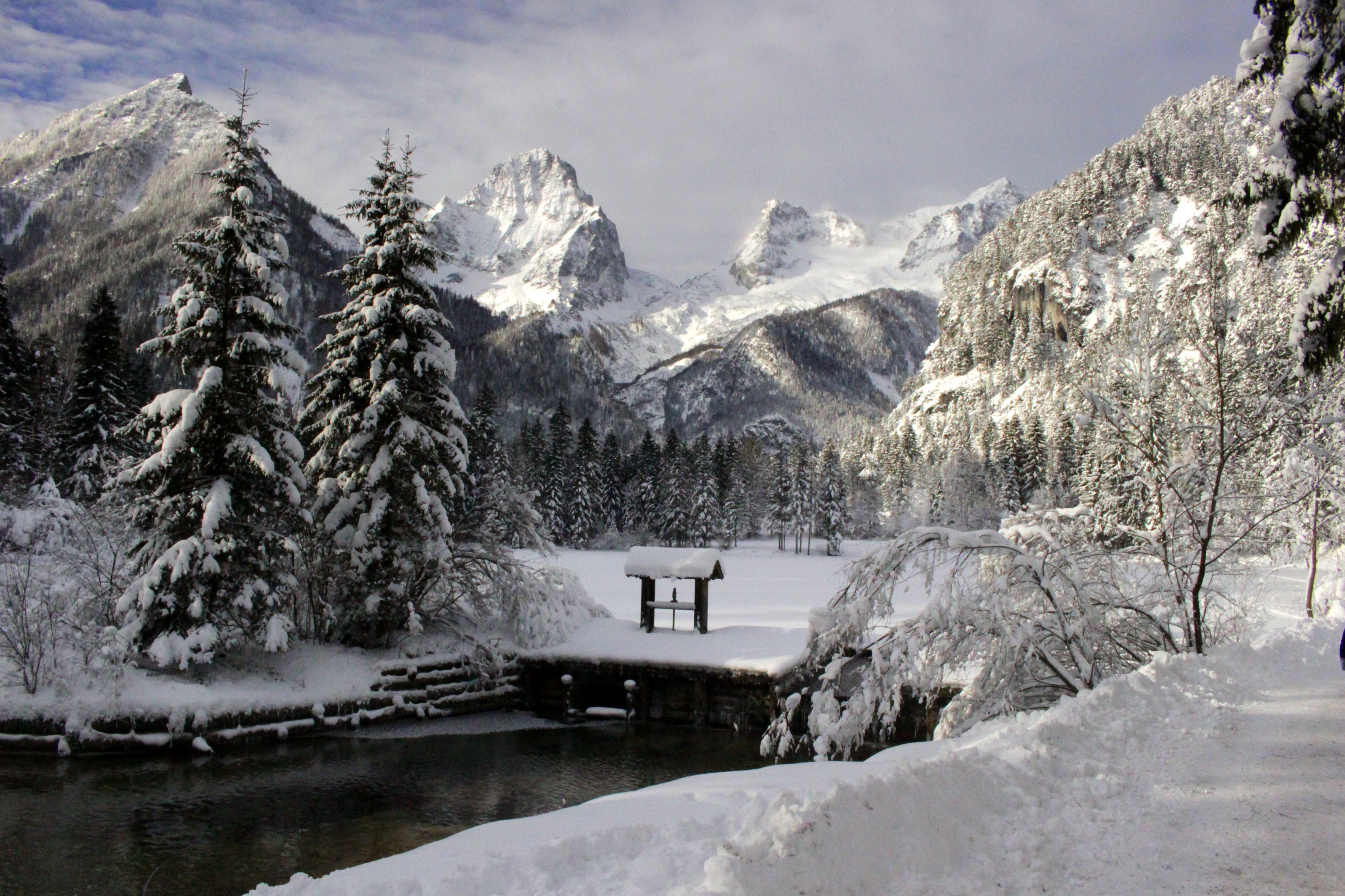 Gambar Pohon Air Gunung Salju Musim Dingin Langit Putih