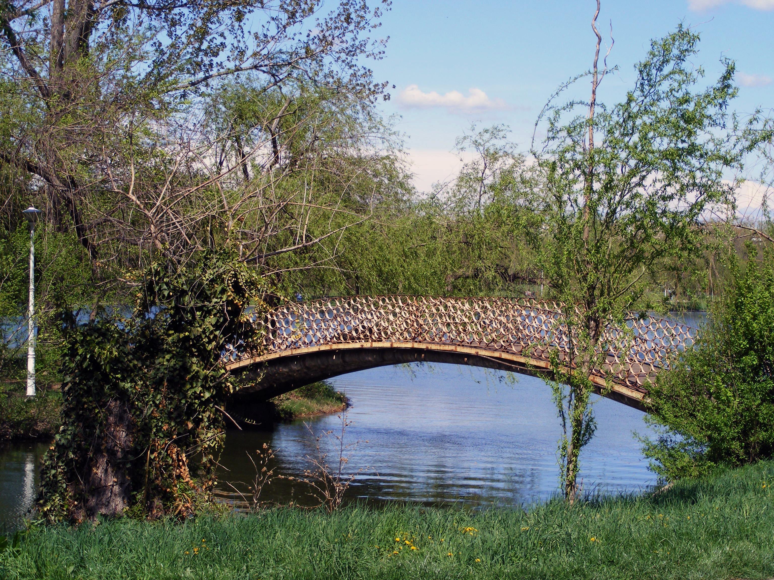 Images gratuites paysage arbre eau la nature chemin for Plante lacustre