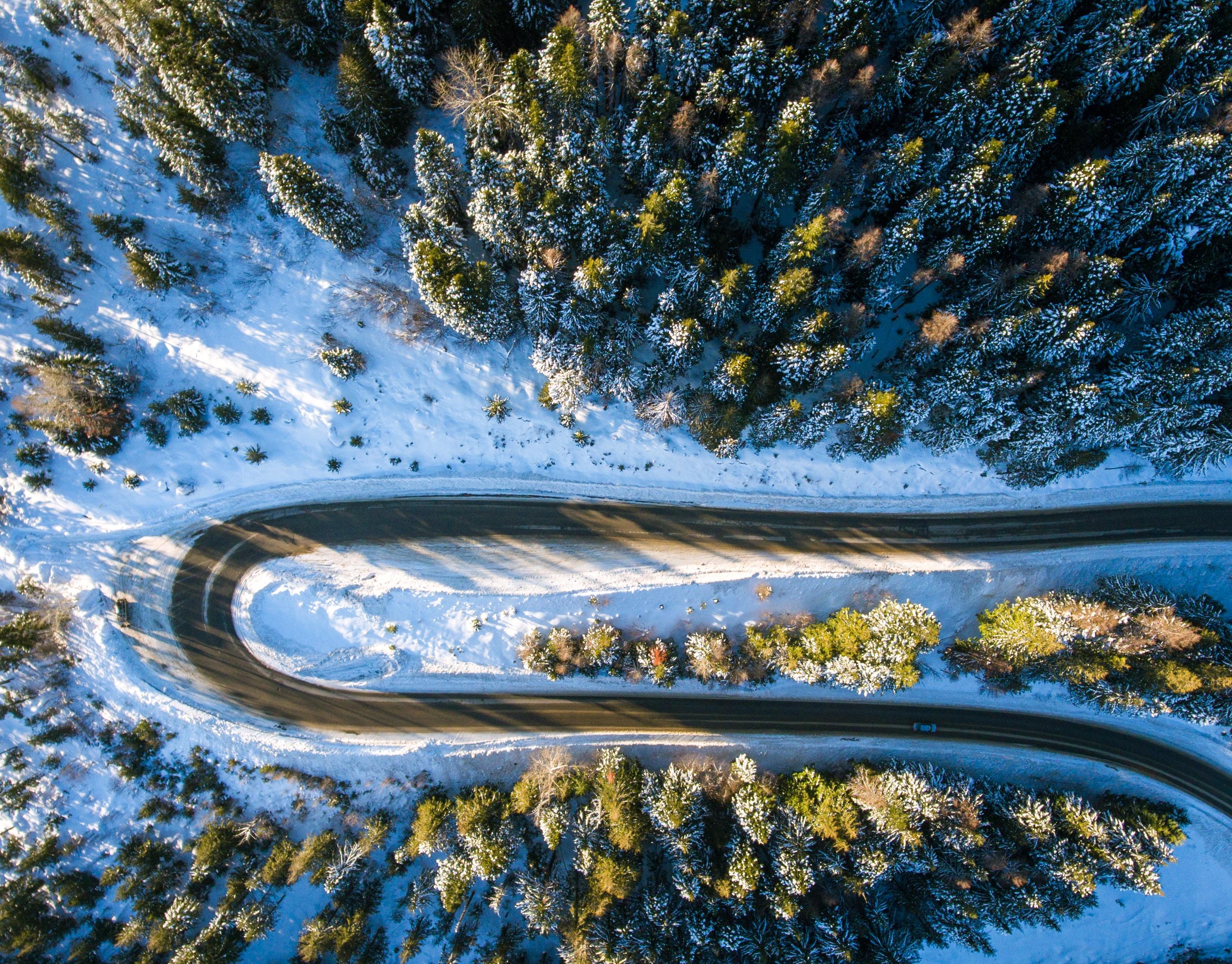Gambar Pemandangan Pohon Alam Langit Suasana Siang Hari