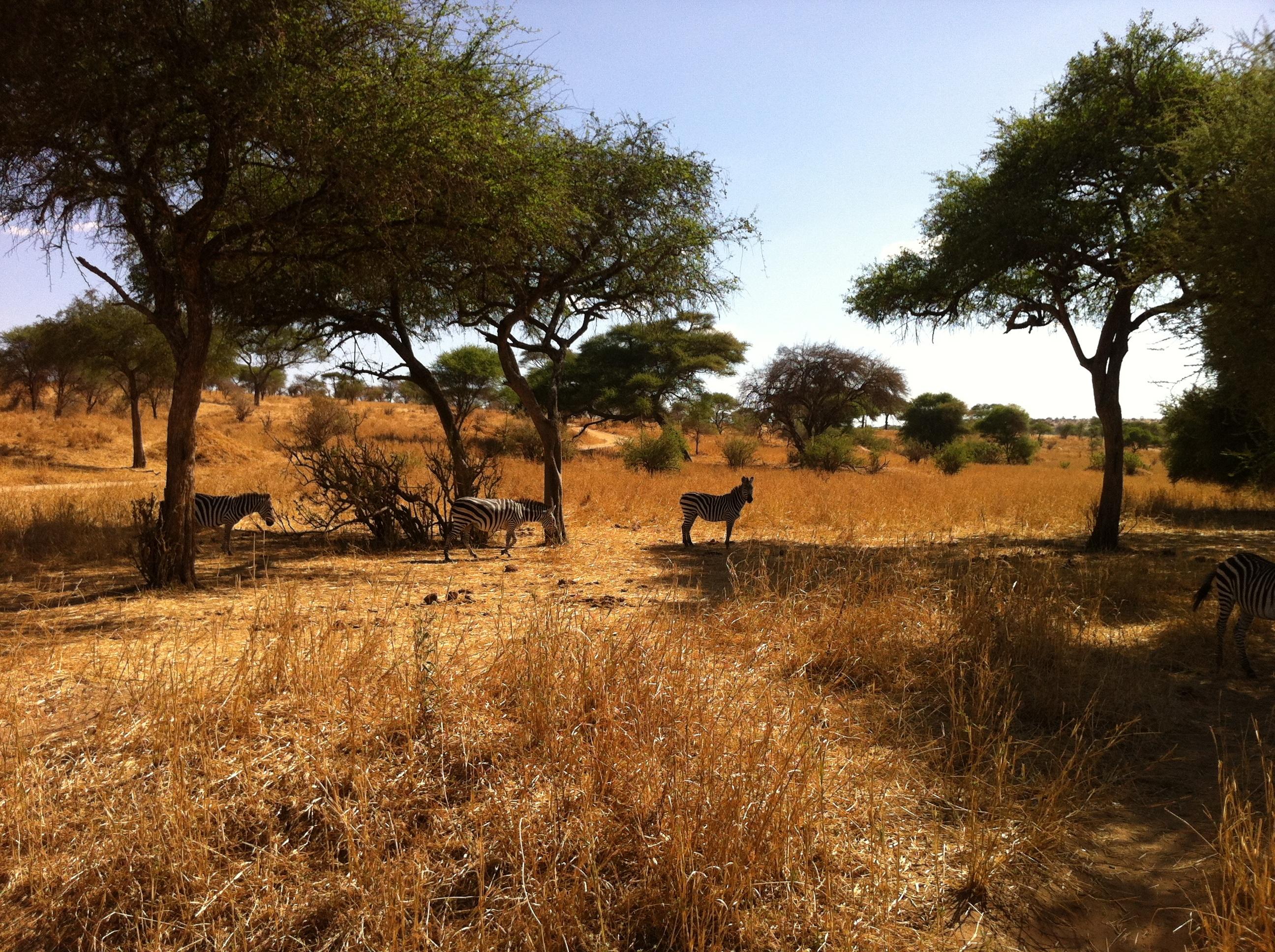 можно картинка природа африки без животных сейчас начну