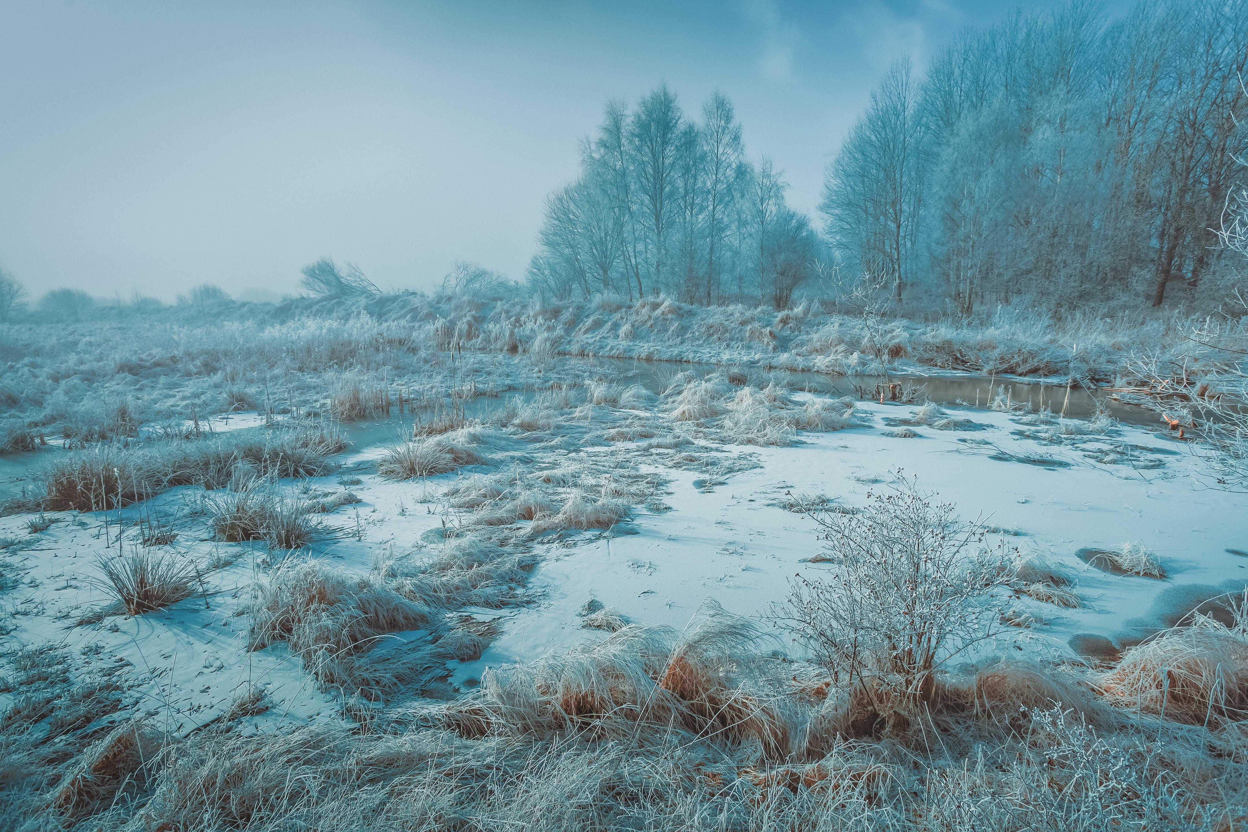 картинки к суровой зиме тундры свойство быстро