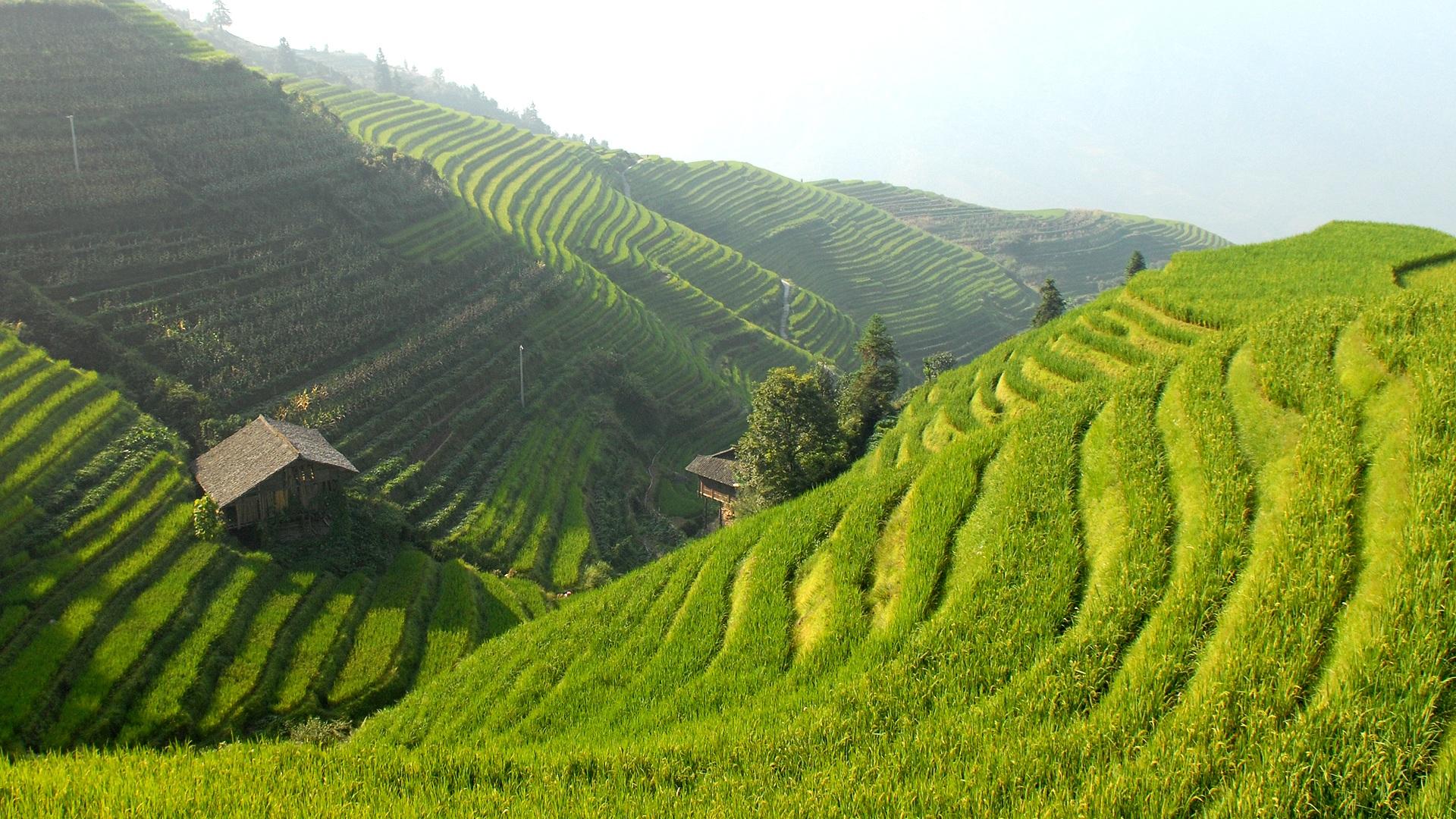 Fotos Gratis Paisaje Viñedo Verde Pastar Suelo