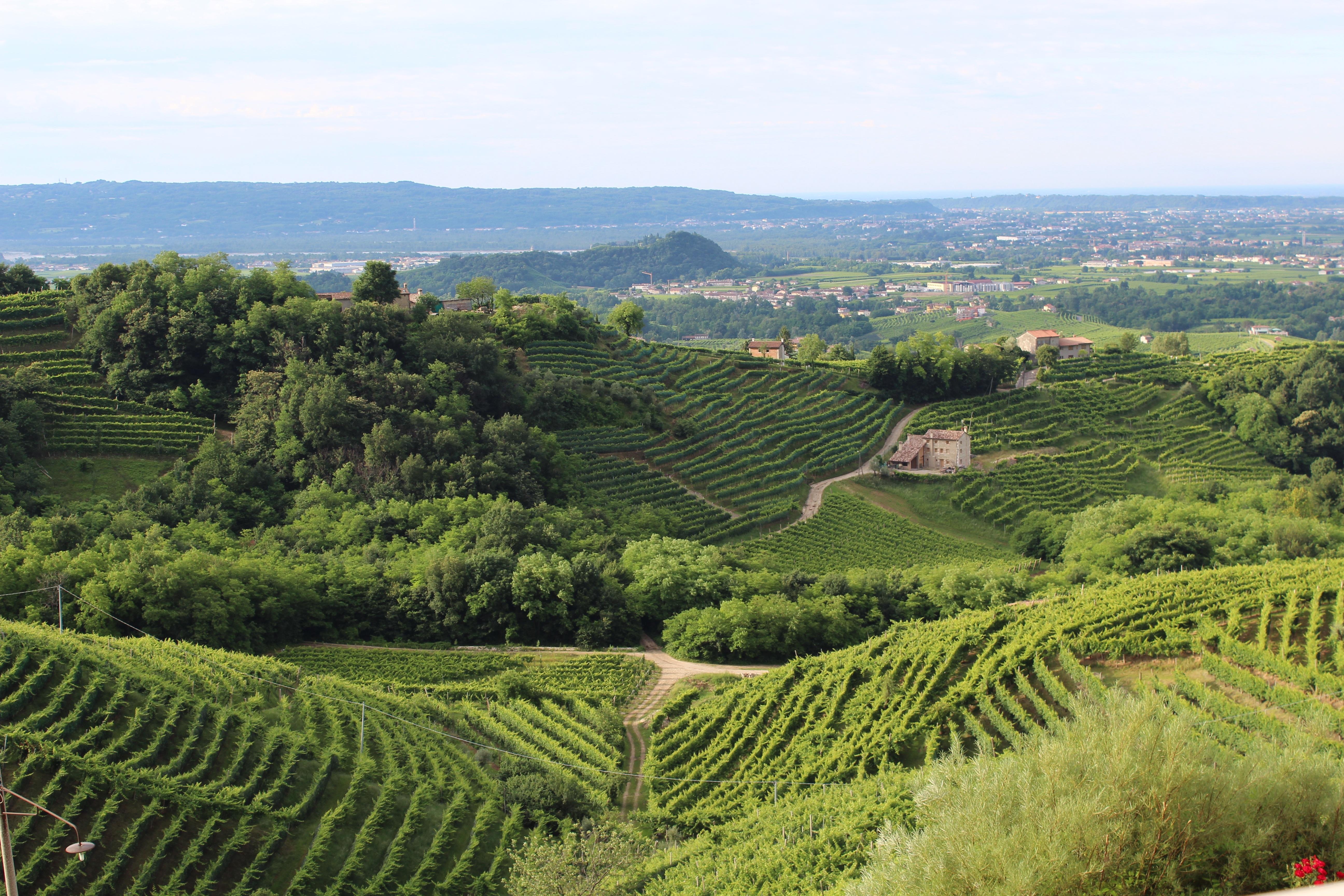 время итальянские виноградники фото страдает аутизмом