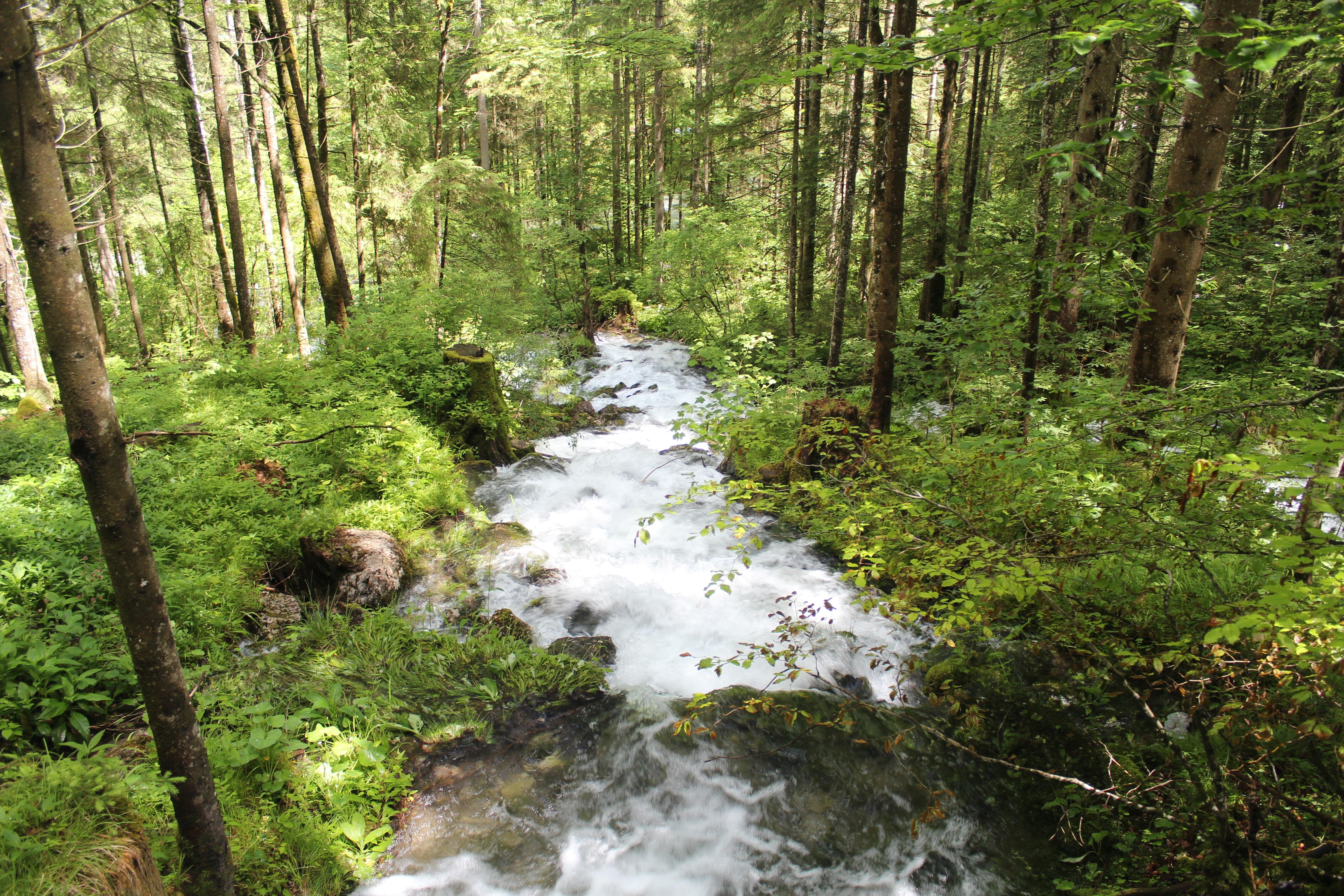 фото ручей в лесу тысячи людей были