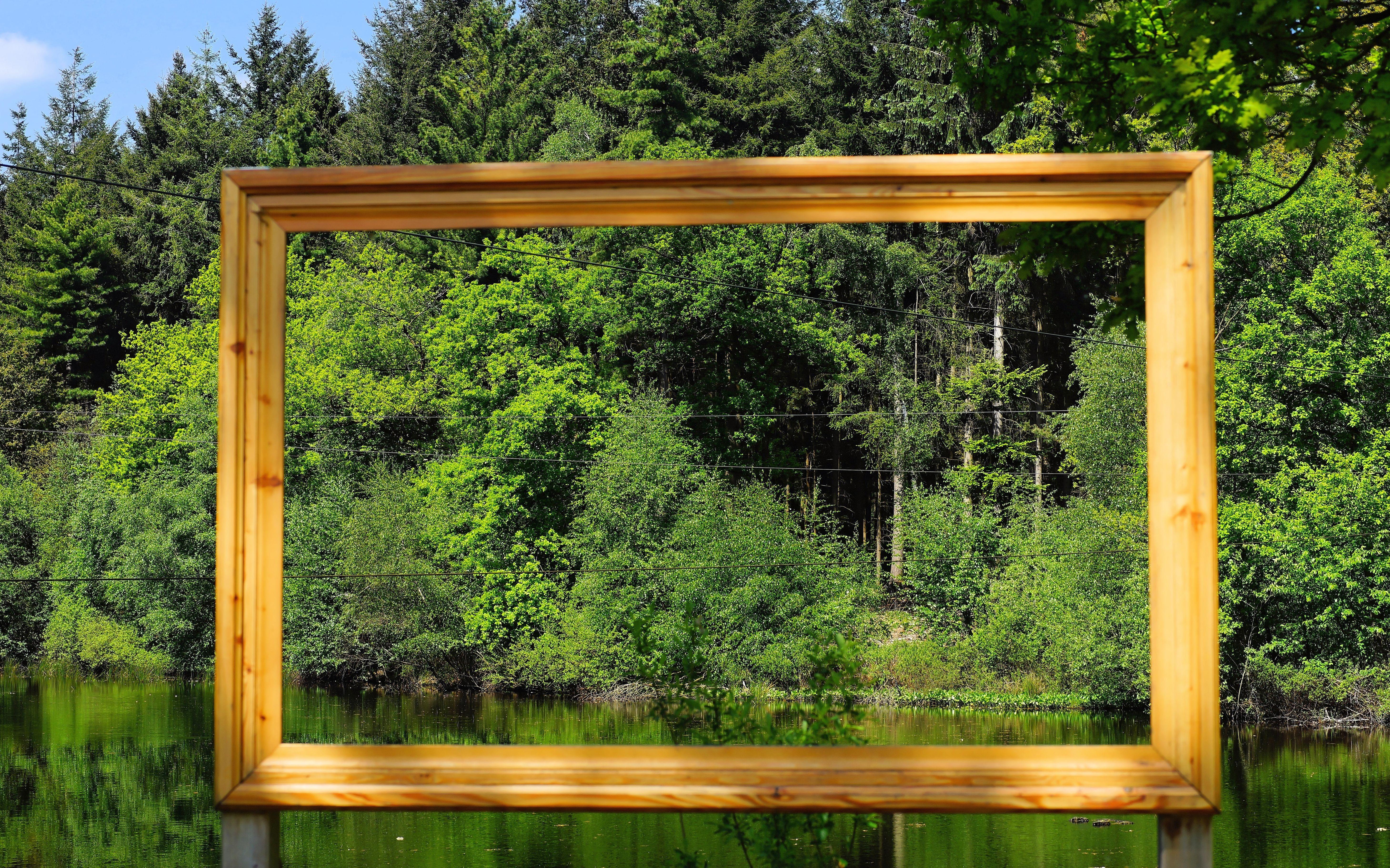 Landscape Water Nature Wood Lake