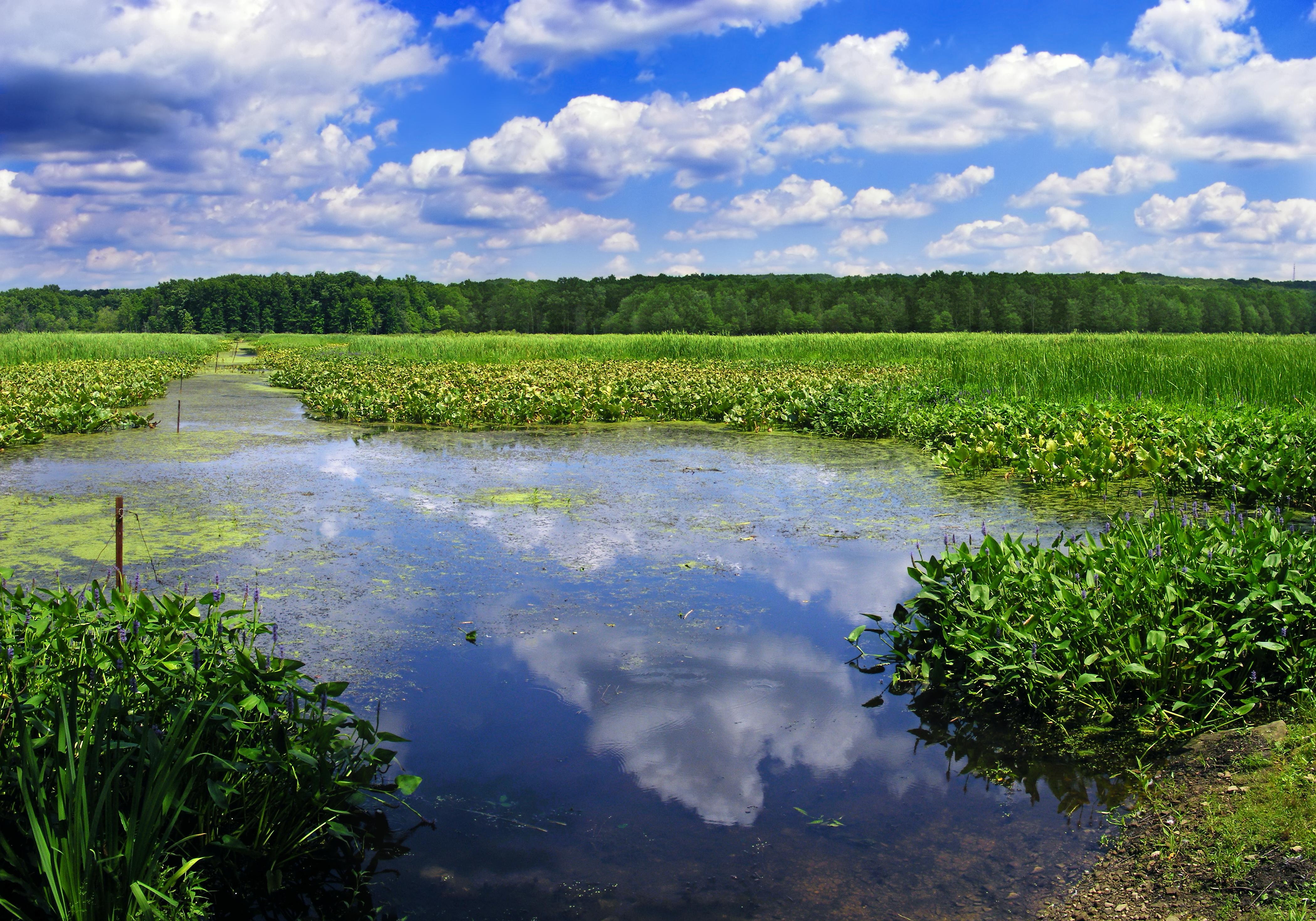 огромным картинки рек озер болот украины автоматически