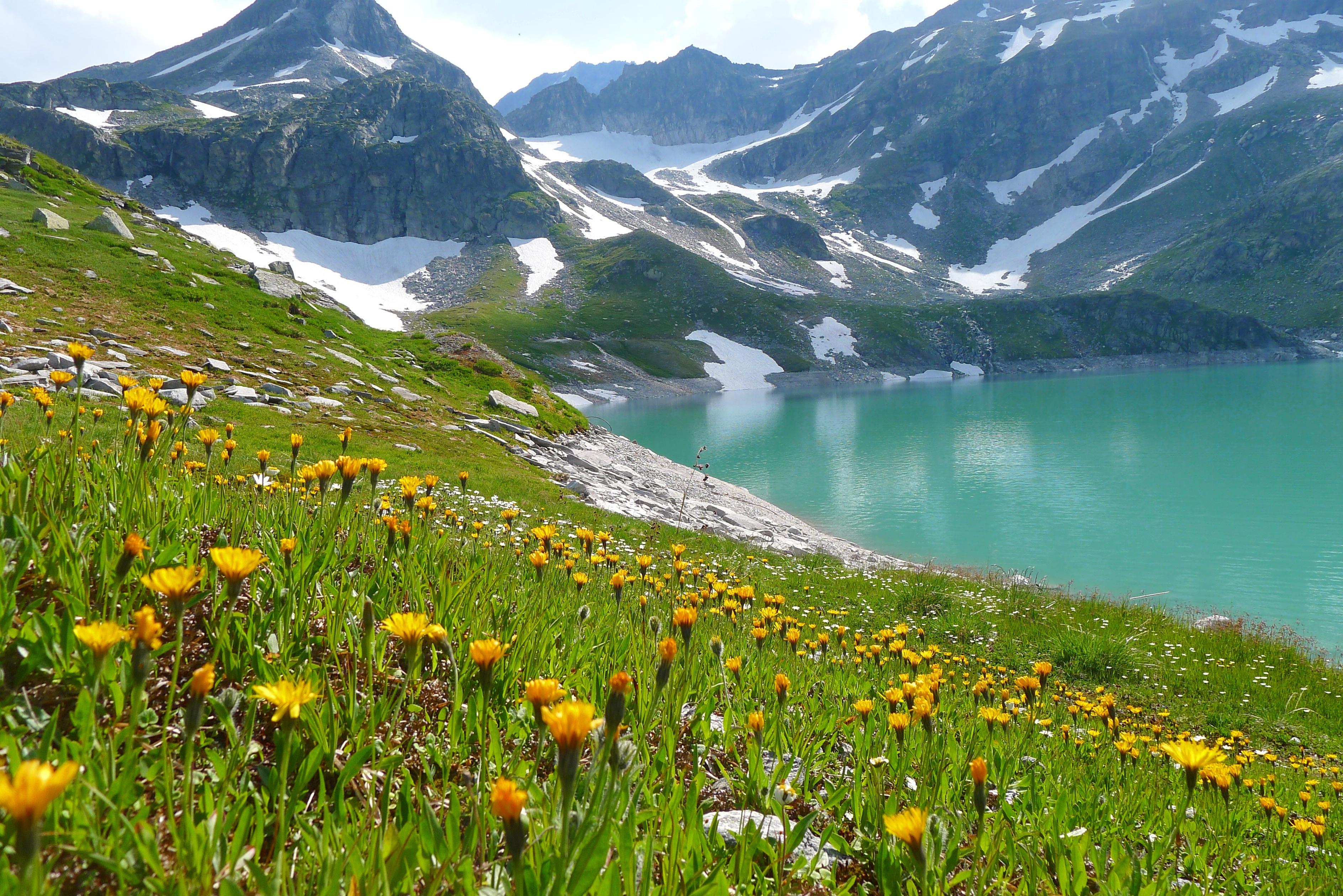 landscape-wilderness-mountain-meadow-prairie-flower-lake-valley-mountain-range-pasture-fjord-ridge-plain-wildflower-alps-grassland-plateau-bergsee-fell-loch-ecosystem-flower-meadow-tundra-landform-tarn-mountain-pass-alpine-landscape-wei-see-salzburg-austria-geographical-feature-mountainous-landforms-562413.jpg
