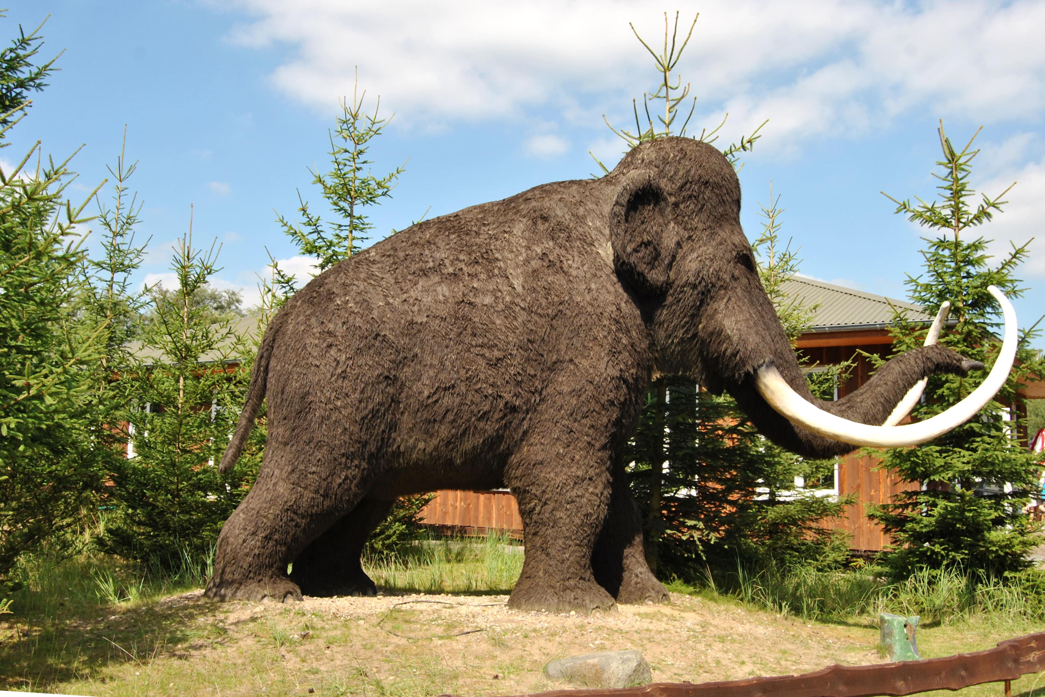 Доклад на тему первобытный зоопарк 2904