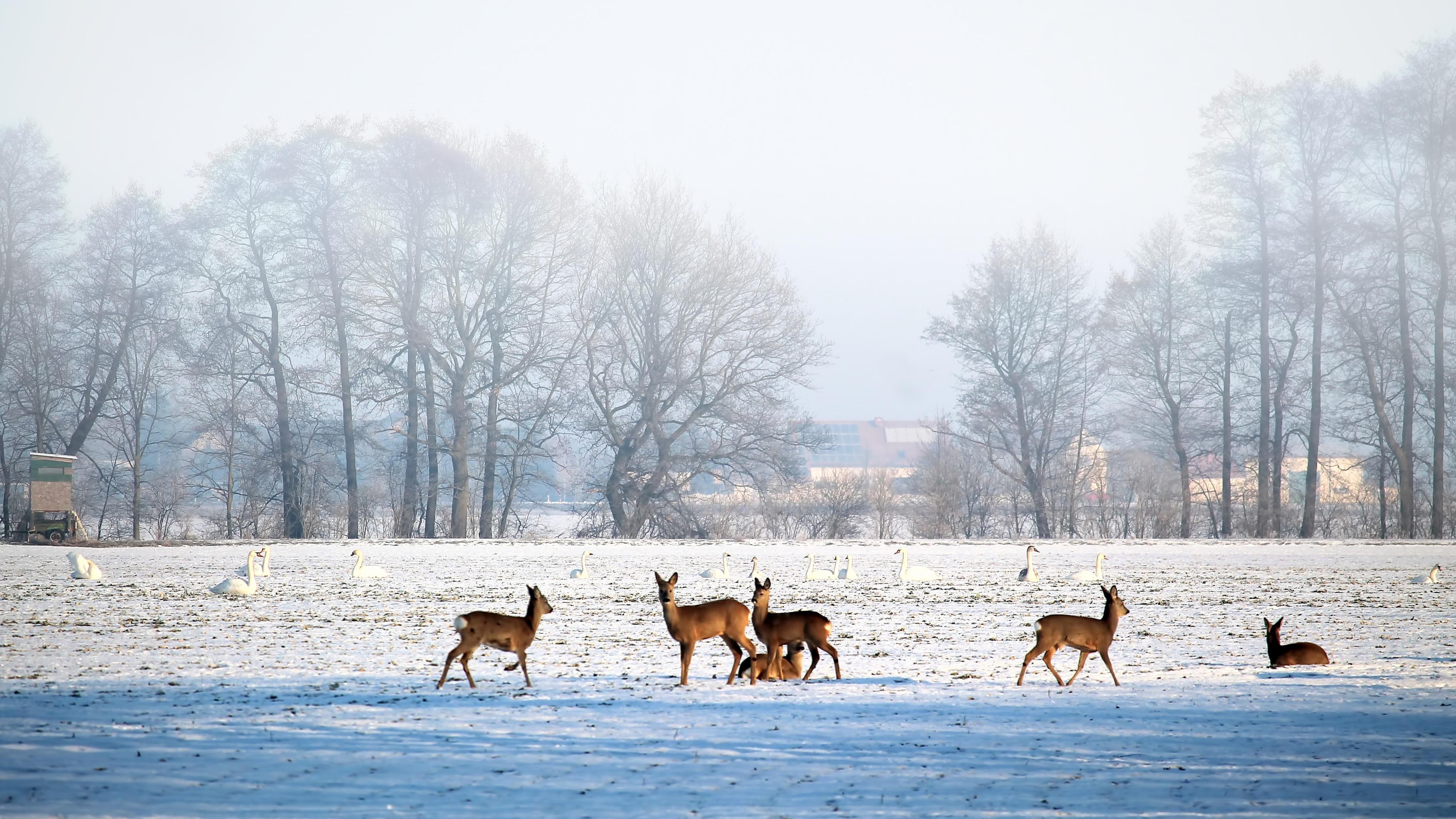 Images gratuites paysage hiver du froid glac neige - Photos de neige gratuites ...
