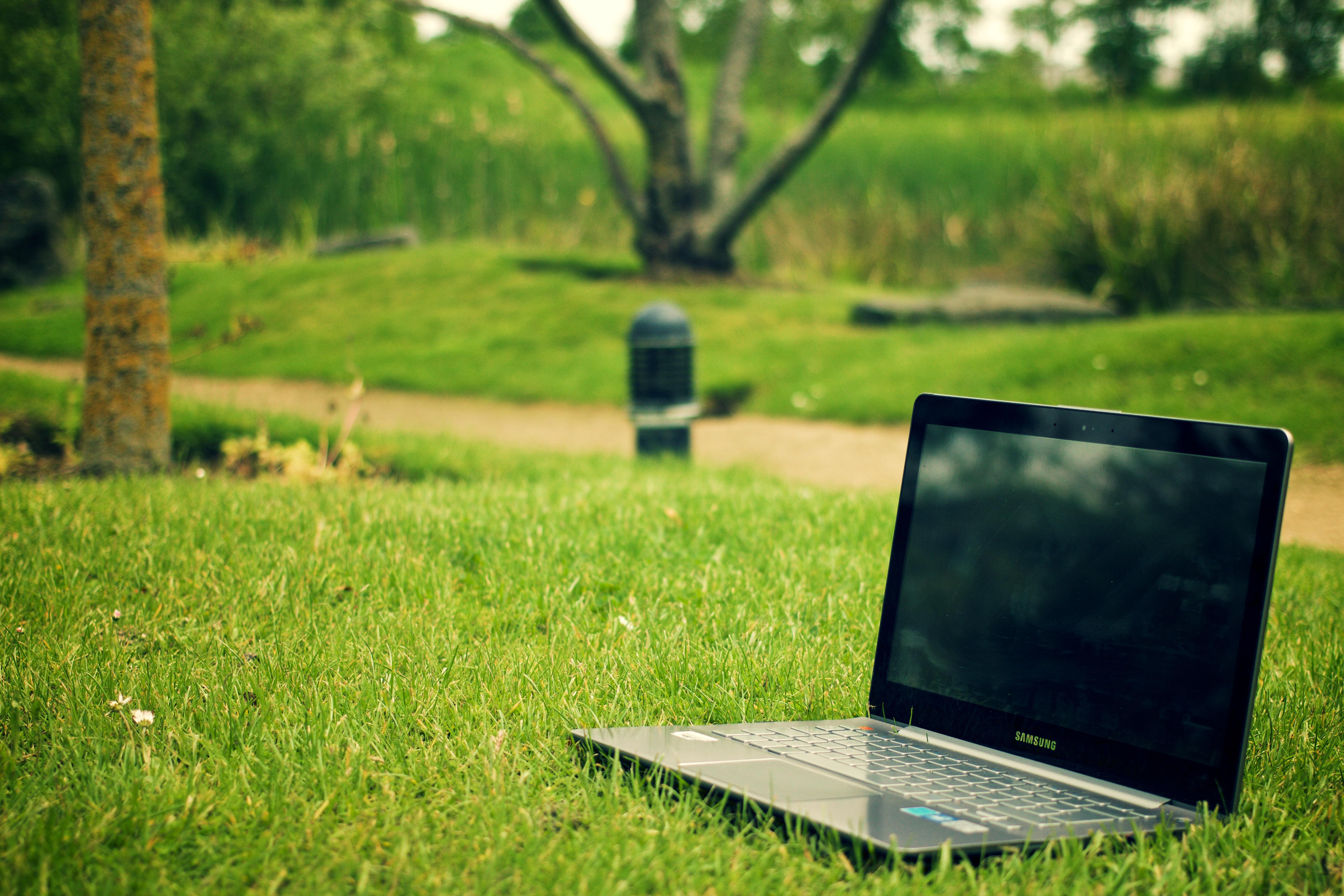 Картинки компьютер и деревья