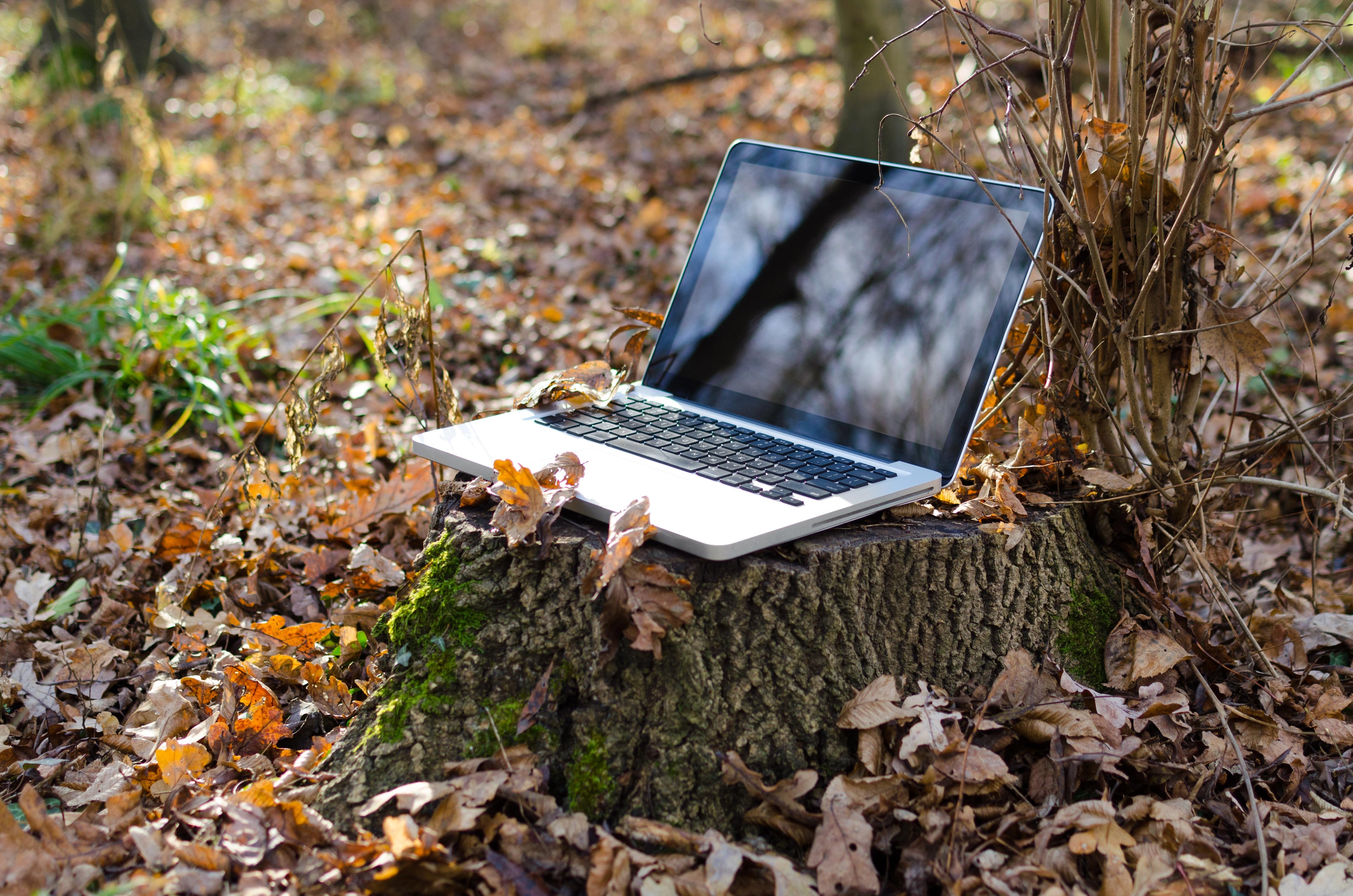 Ноутбук на природе картинки