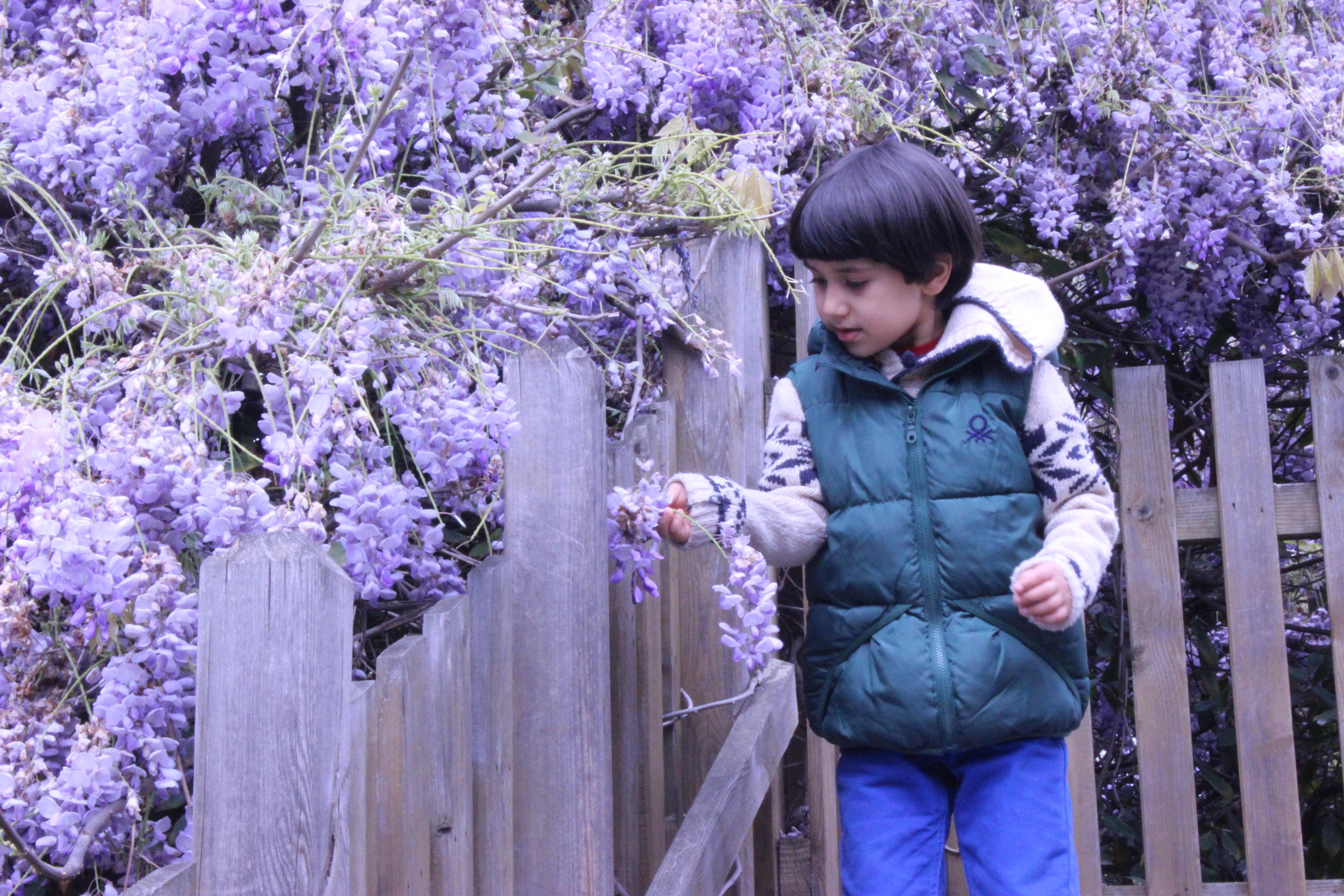Gambar Warna Lembayung Muda Bunga Ungu Menanam Musim Semi Botani Wisteria Pohon Lavender Inggris Tanaman Berbunga Mekar Delphinium Taman Belukar 5184x3456 M Murat Ataman 1592517 Galeri Foto Pxhere