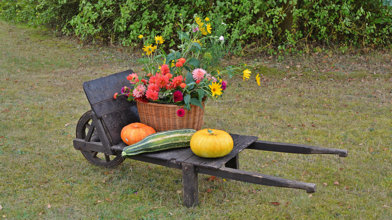 images gratuites pelouse fleur d coration aliments r colte produire l 39 automne. Black Bedroom Furniture Sets. Home Design Ideas