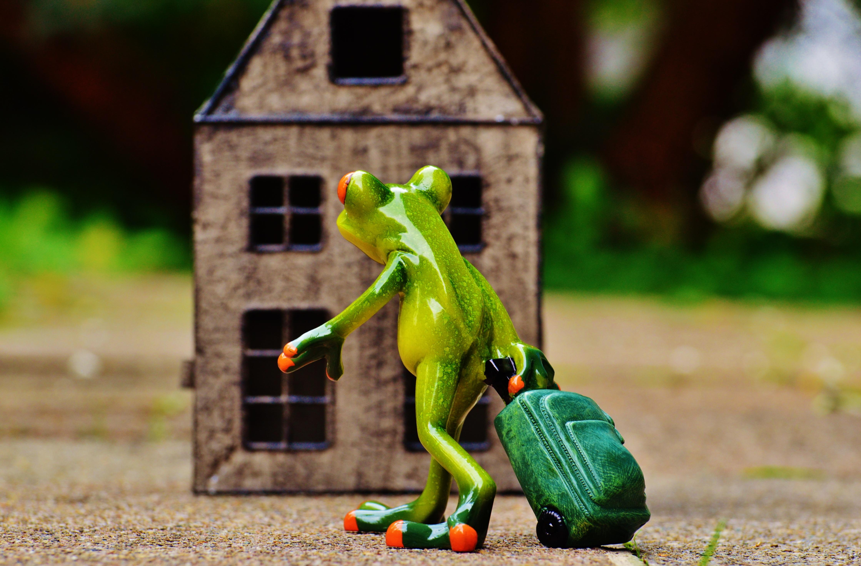 Trolley In Huis : Gratis afbeeldingen gazon spelen zoet huis schattig