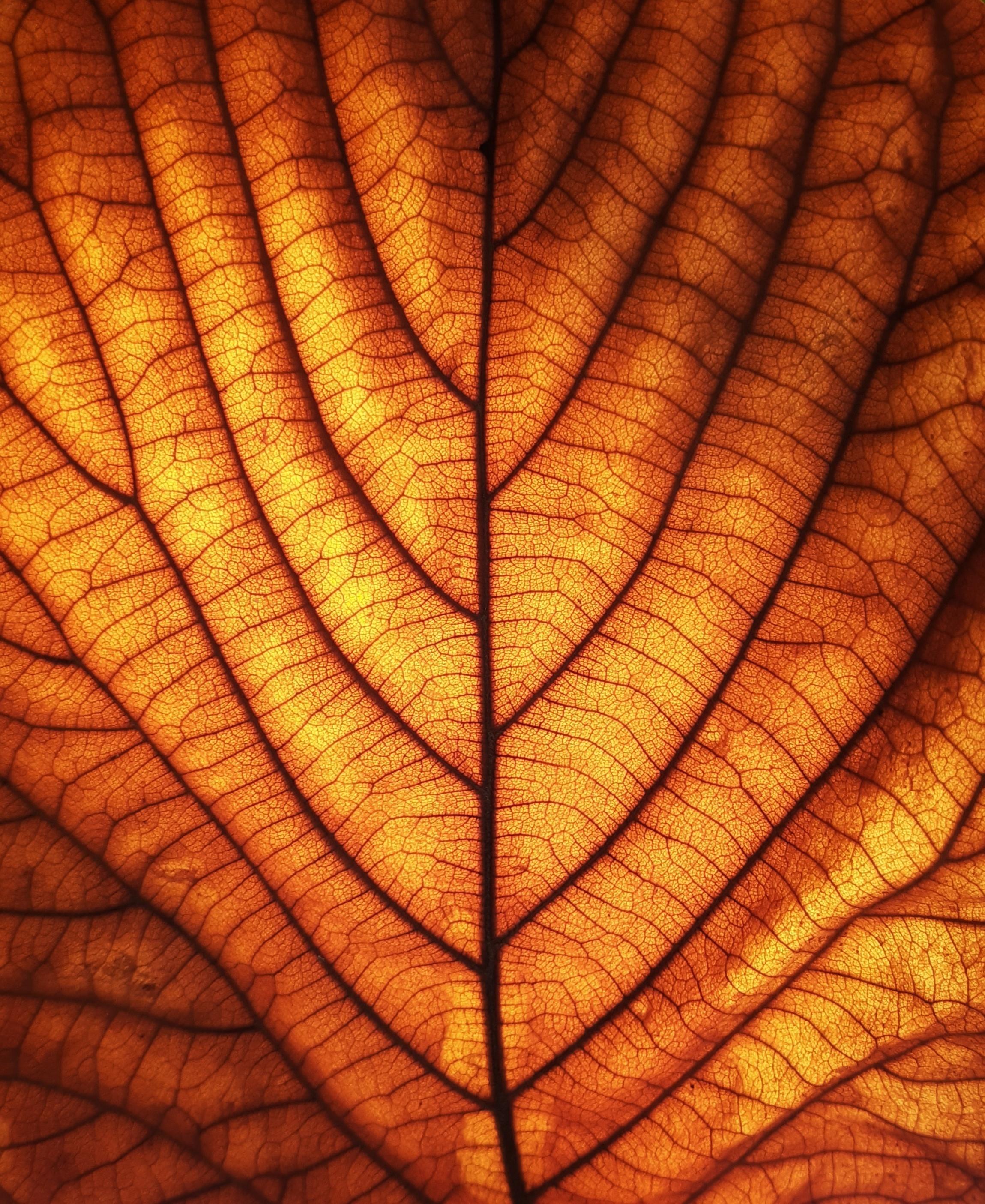 Free Images Leaf Autumn Tree Texture Orange Light