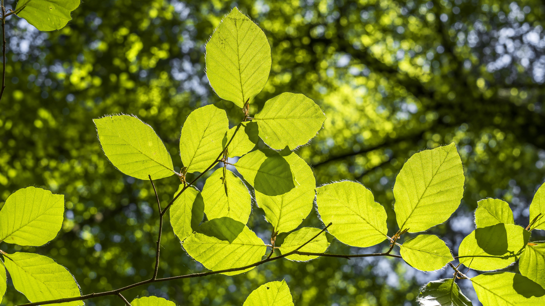 картинка фото дерева и листьев большой