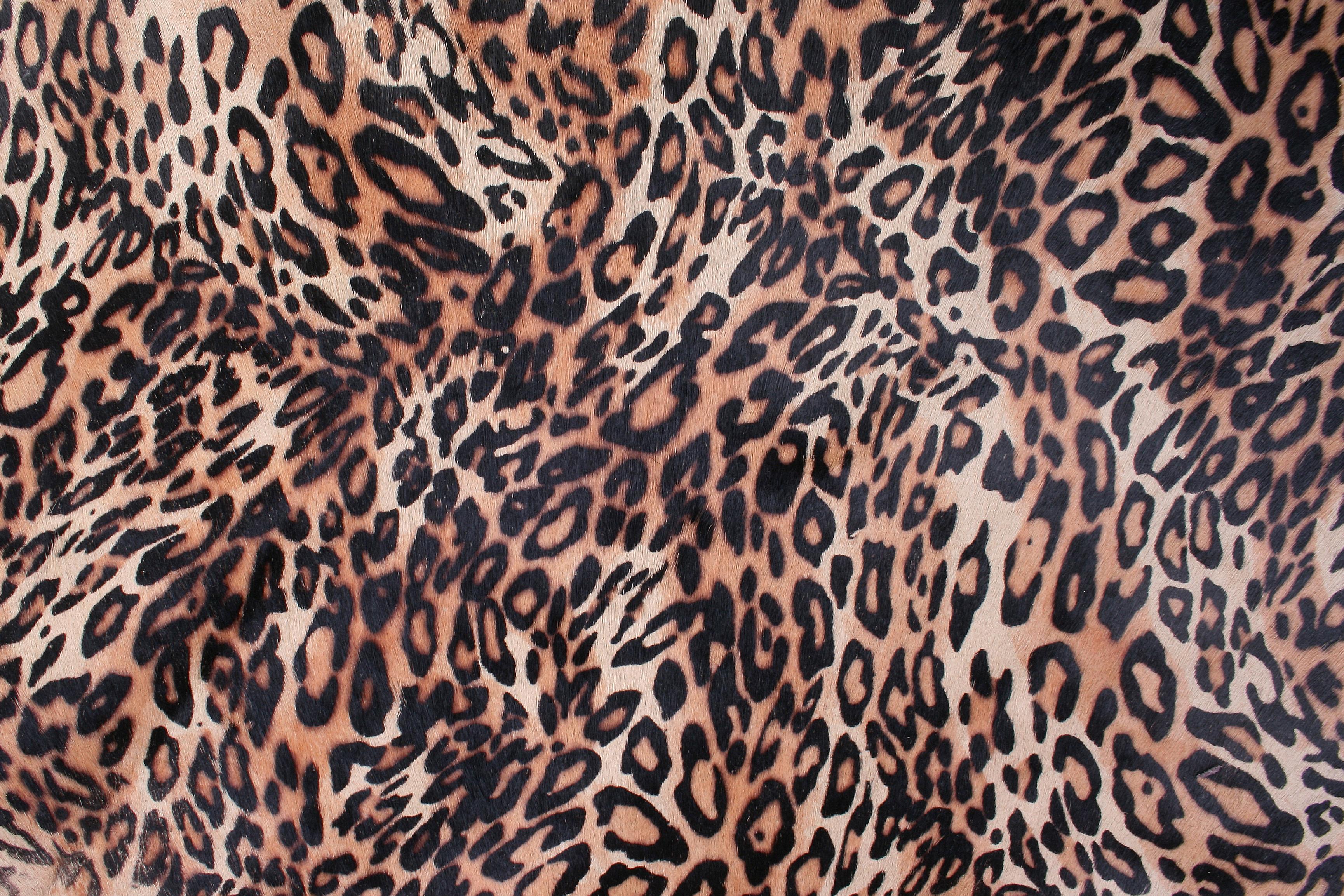 Free Images : fauna, close up, whiskers, vertebrate, jaguar, chiba, leather texture, big cats ...