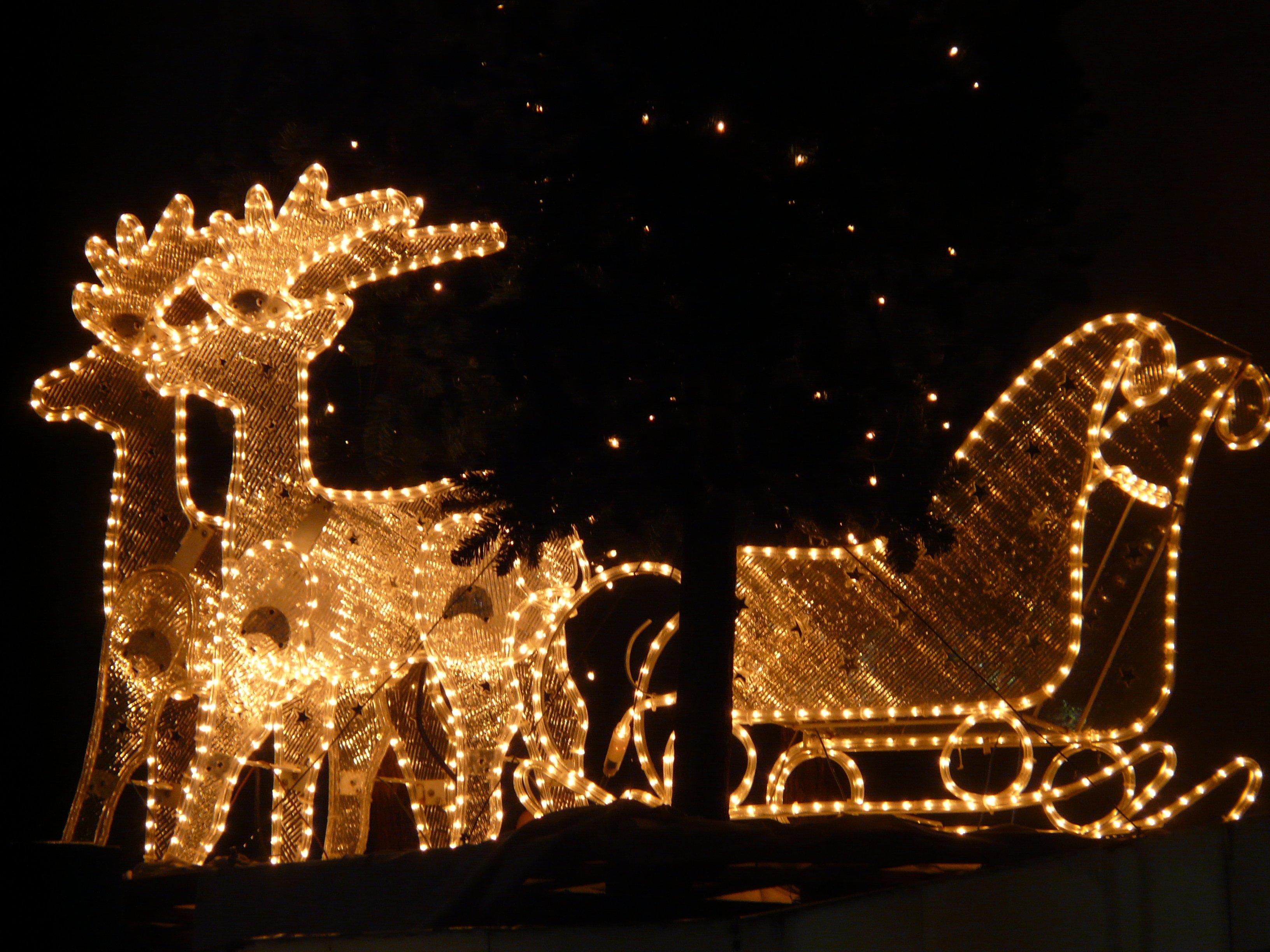 Kostenlose Foto : Lichterkette, Weihnachten, Rentier, Elch, Gleiten,  Winter, Licht, Nacht , Lampen 3264x2448