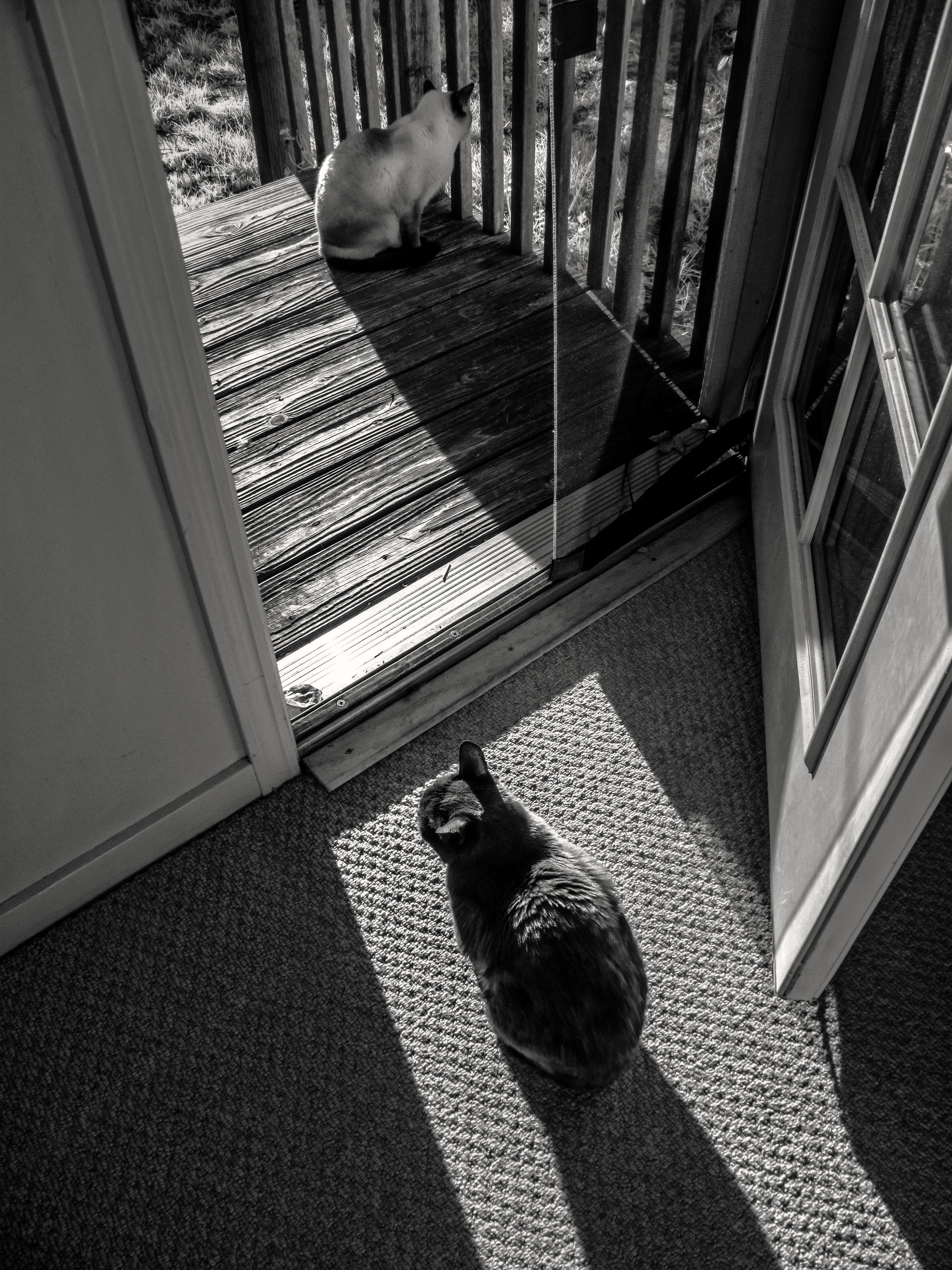 Velká kočička tube8