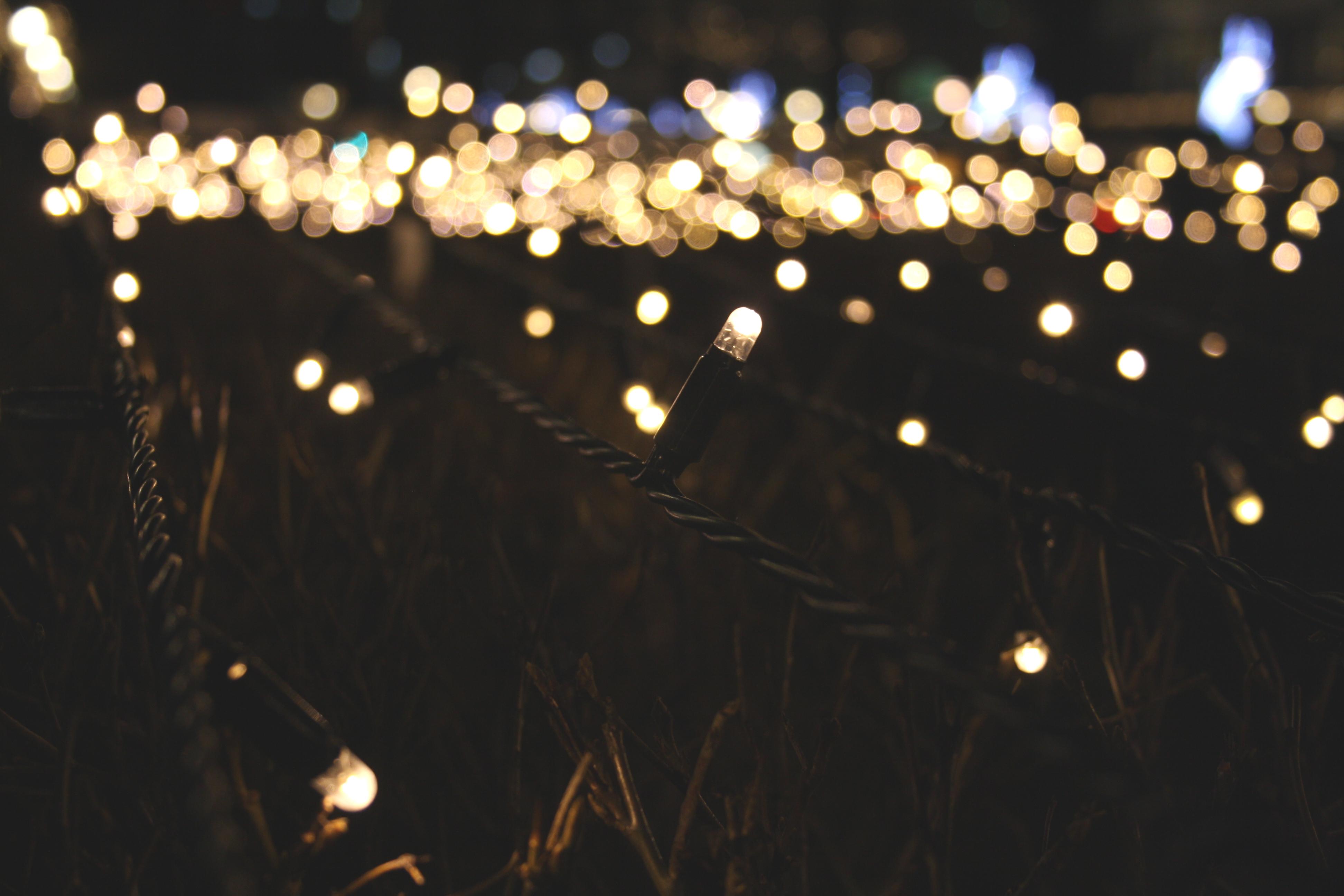 light bokeh blur night sunlight flower dark sparkler decoration darkness black lighting close up focus shining