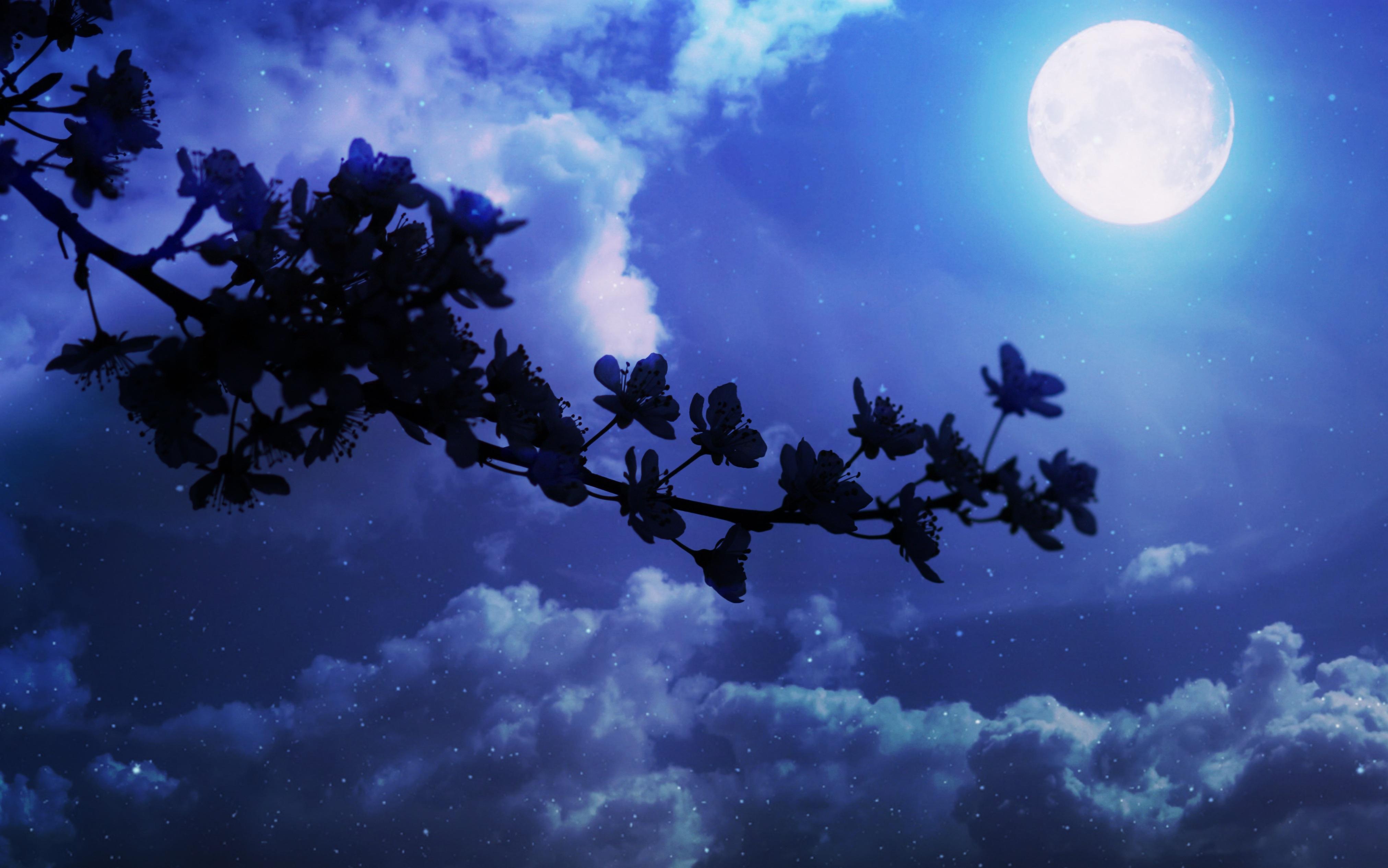Light Cloud Sky Night Sunlight Atmosphere Spring Shadow Darkness Full Moon Moonlight Flowers Luna Astronomical Object