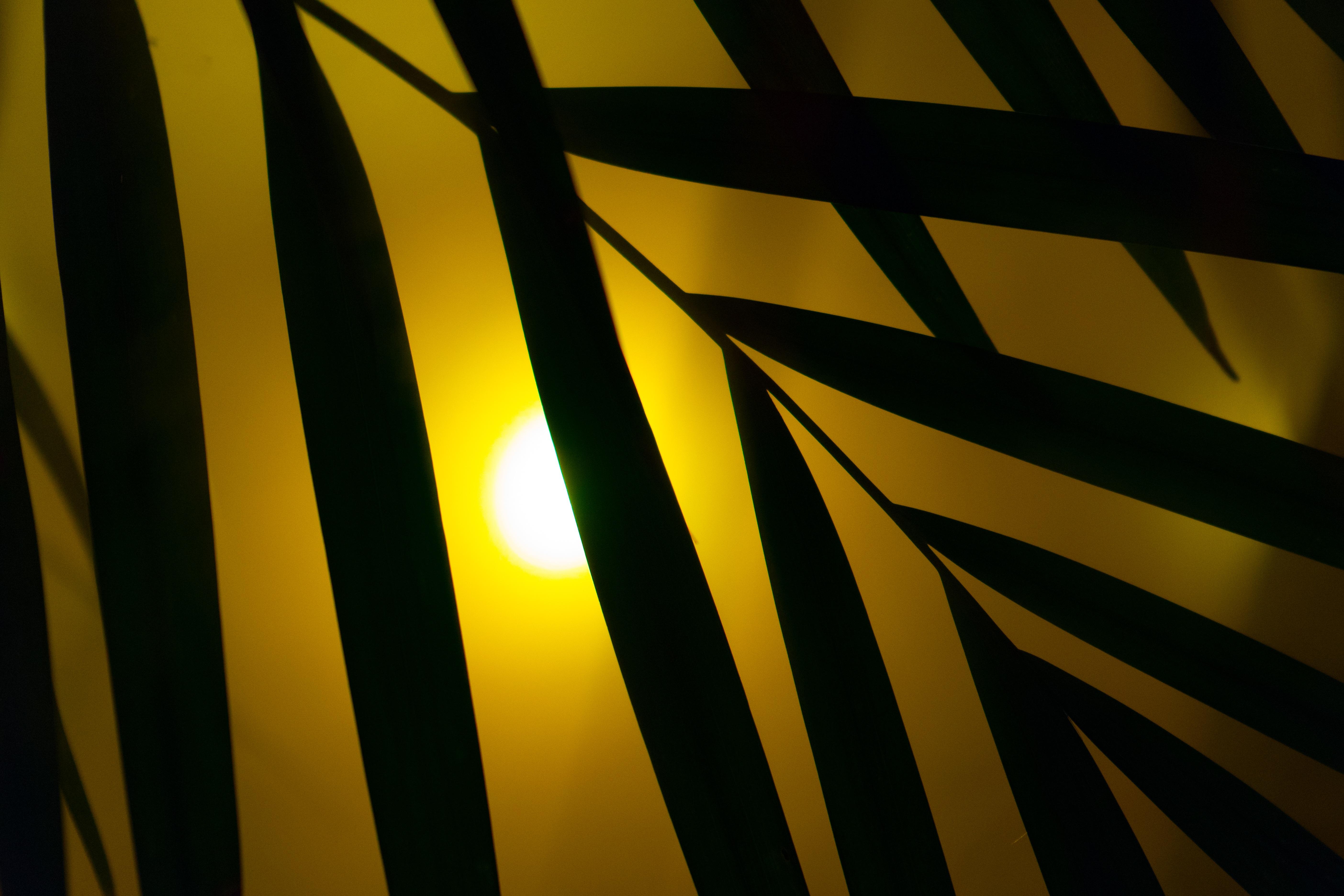 light fog sunlight leaf smoke summer line reflection palm color shadow lamp black colorful yellow lighting heat circle neon neon light art design party symmetry artificial shape diffuse neon lights computer wallpaper image series schemes neon lamps yukka 1407875