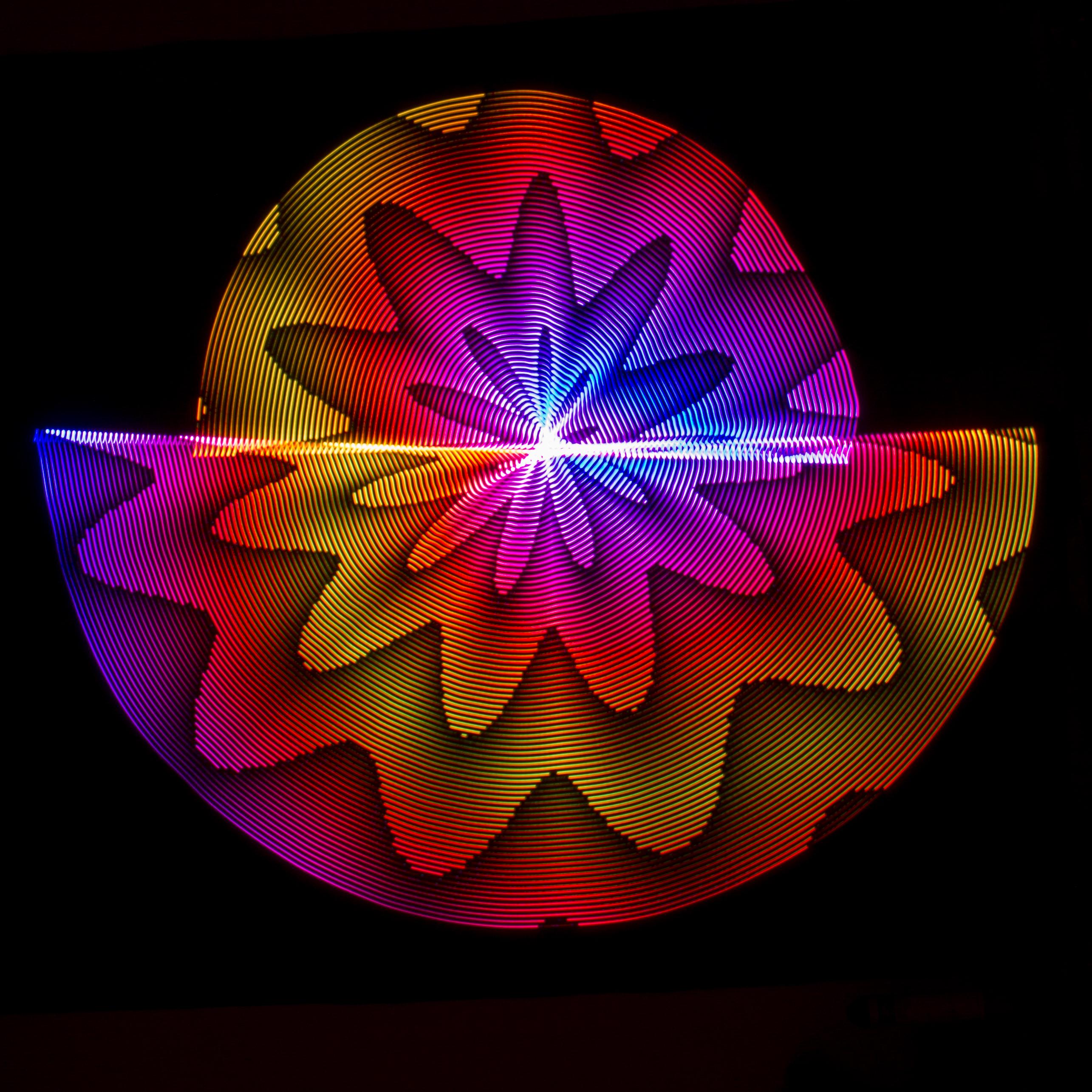 free images light leaf flower purple petal pattern red