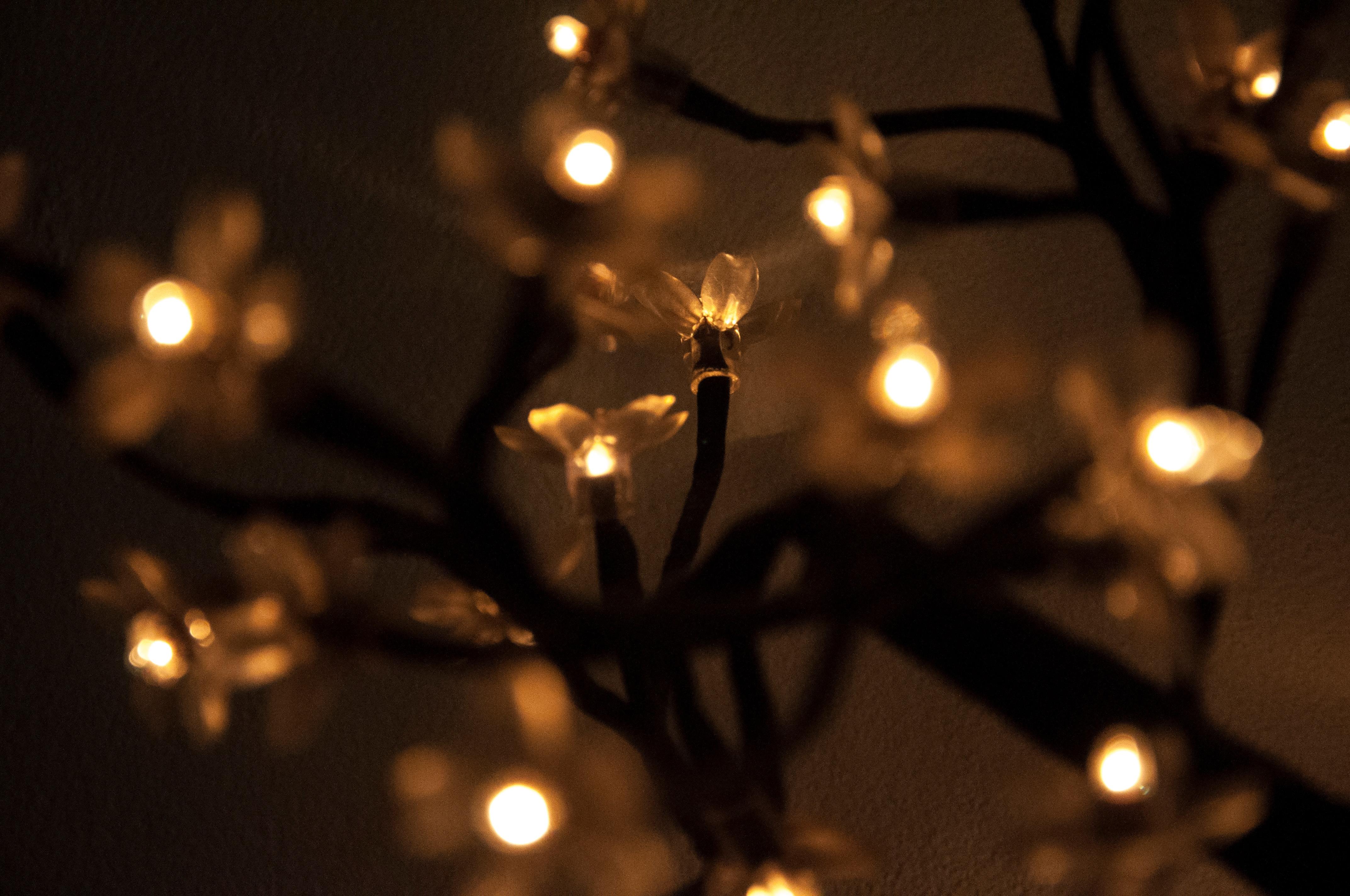 Free images night flower darkness lighting christmas light night flower darkness christmas lighting christmas decoration light fixture macro photography christmas lights arubaitofo Choice Image