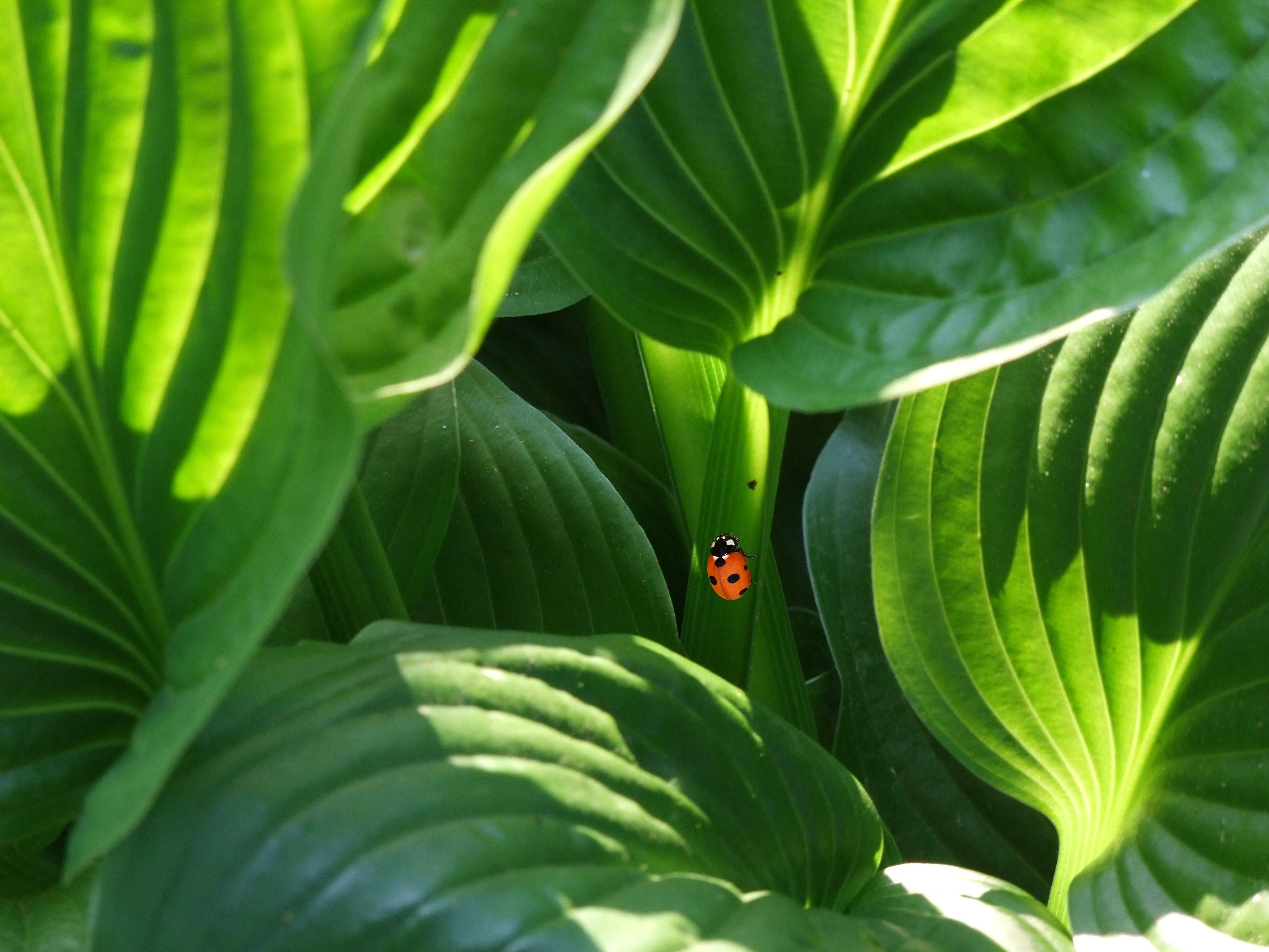 Habitat Düsseldorf free images light leaf flower green jungle shadow ladybug