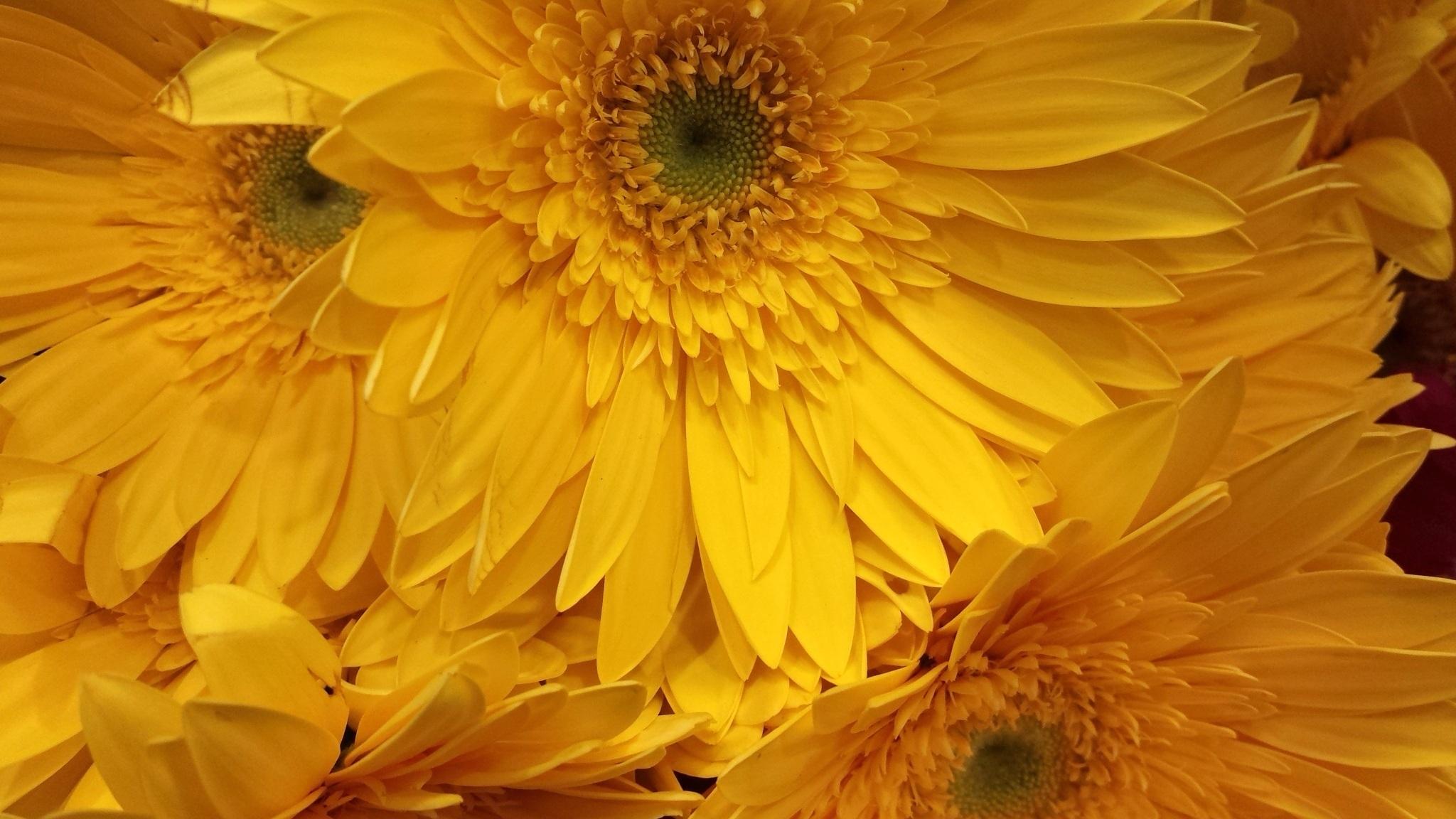 Images Gratuites Lumière Du Soleil Texture Fleur Pétale