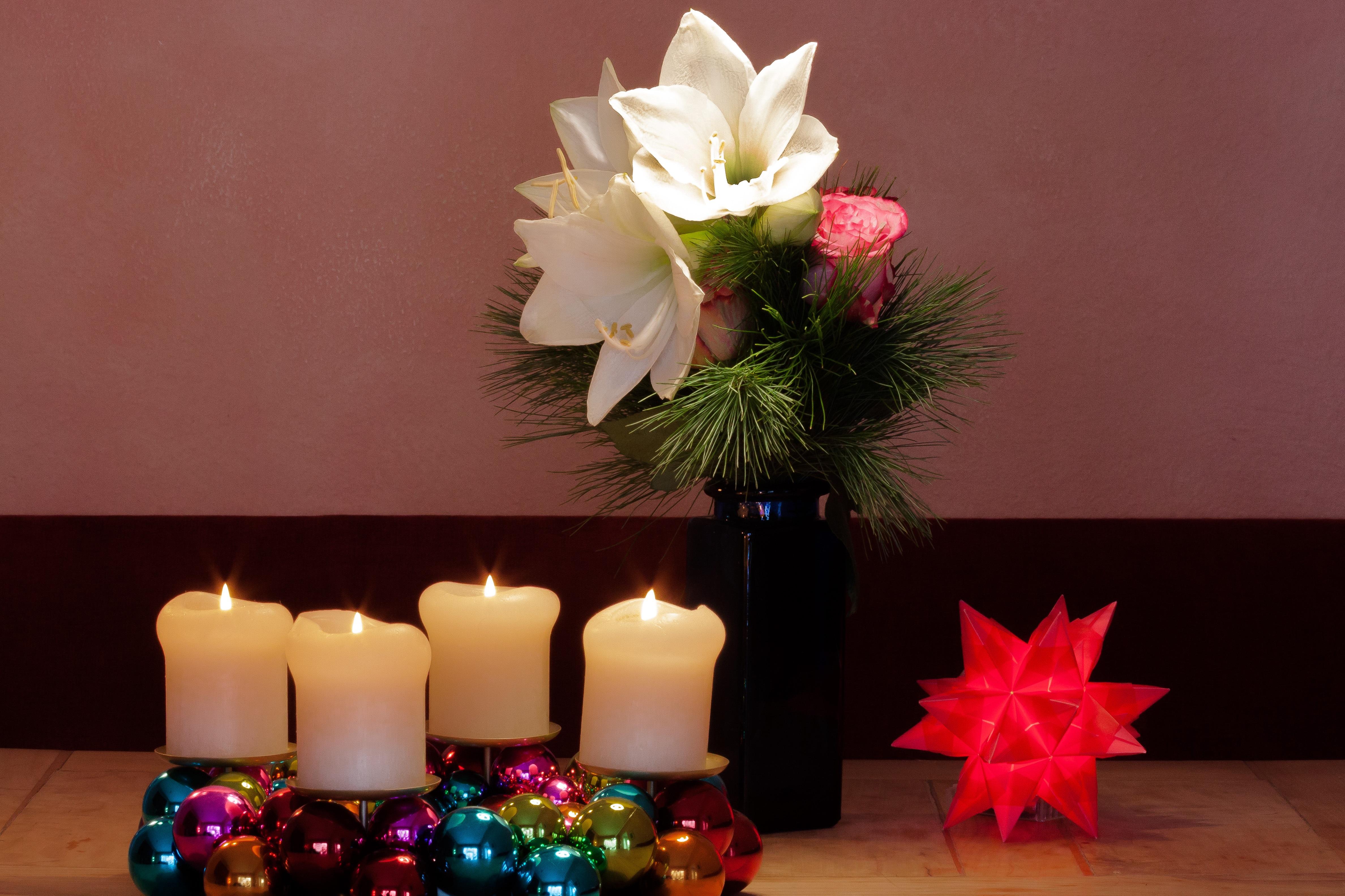 Adventskranz Bilder Kostenlos kostenlose foto licht pflanze weiß blume blütenblatt rot