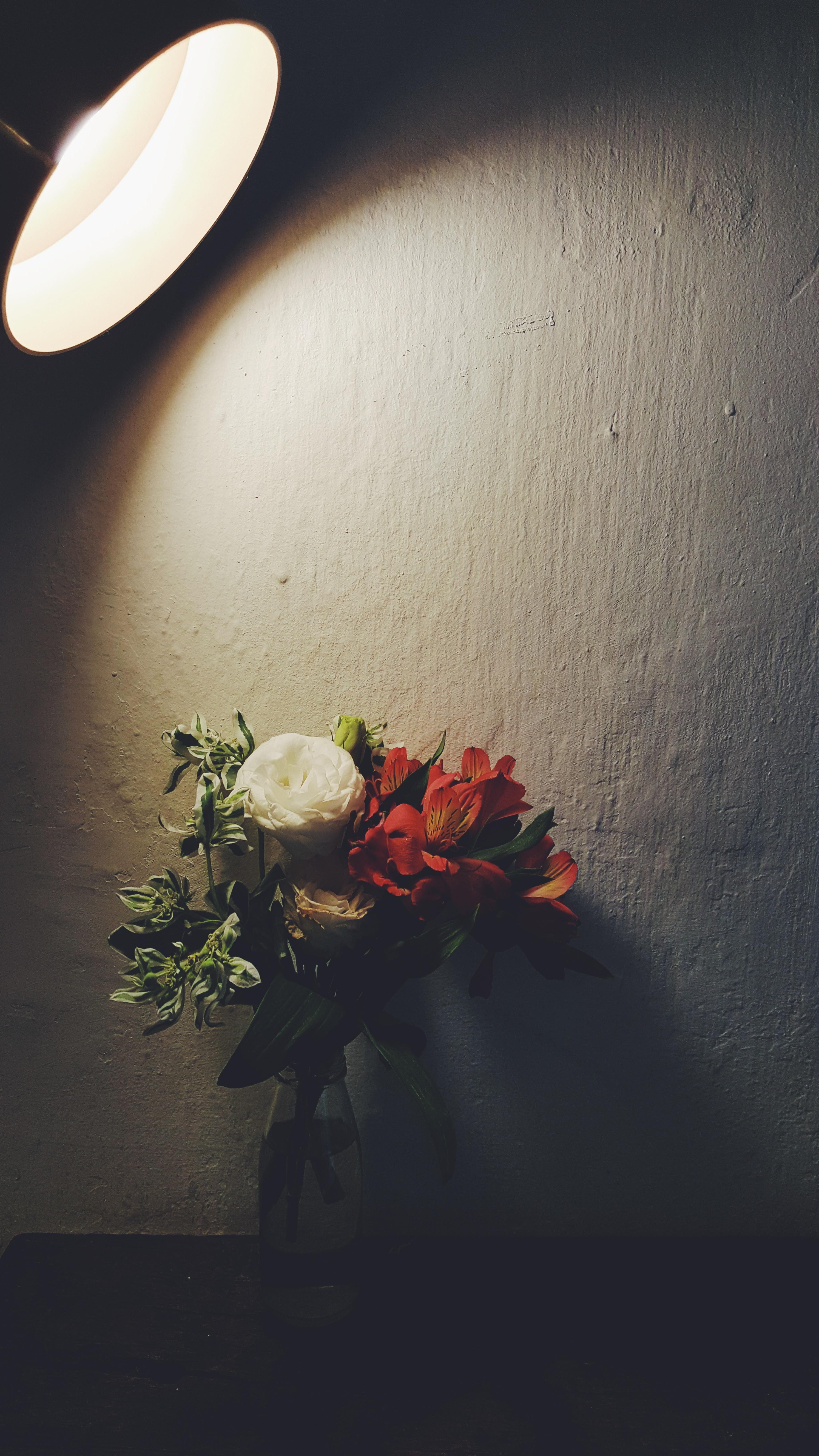 cahaya menanam putih fotografi daun bunga daun bunga hijau refleksi merah warna kegelapan hitam kuning penerangan