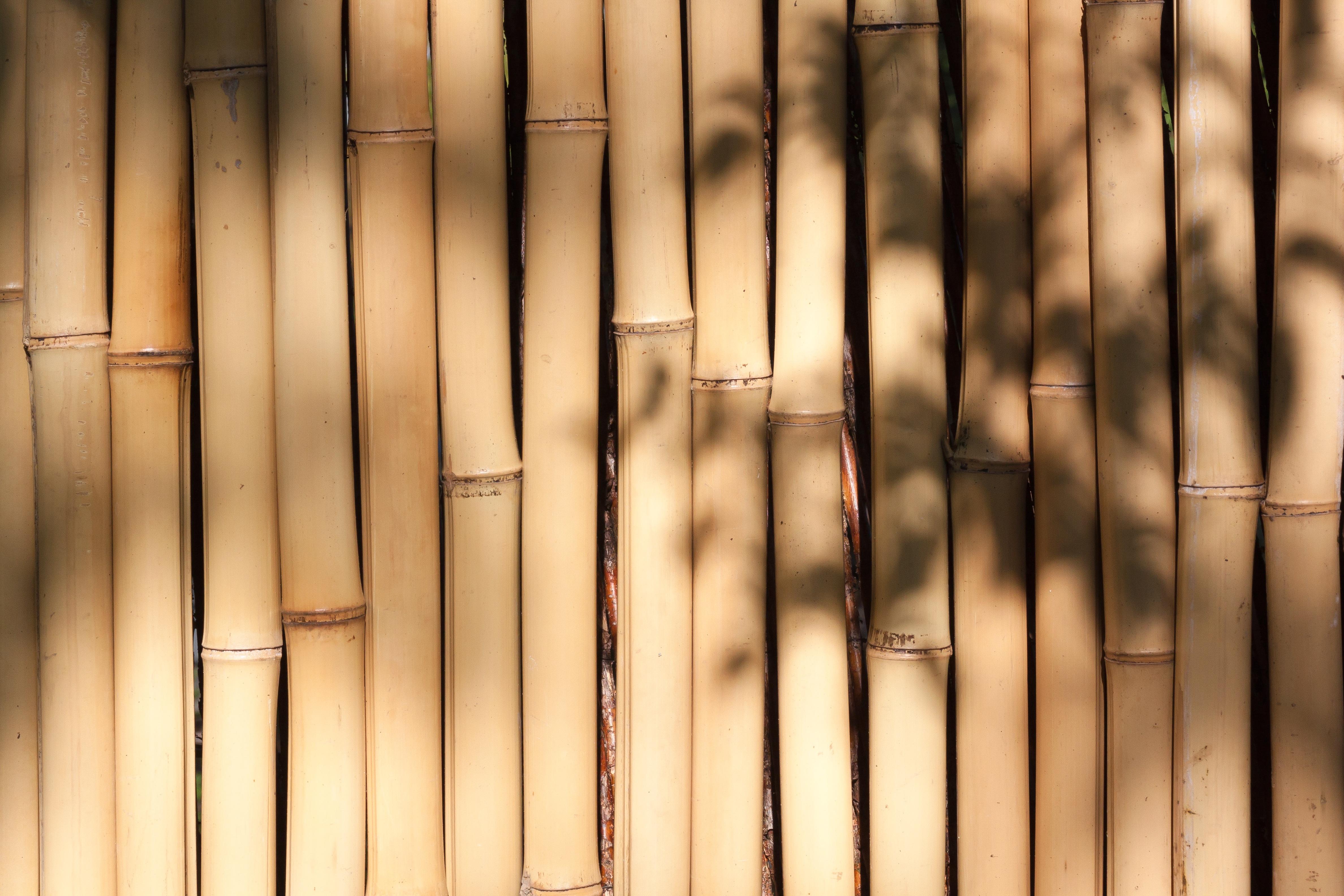 ligero planta madera luz de sol lnea iluminacin flora diseo de interiores fondo diseo simetra bamb