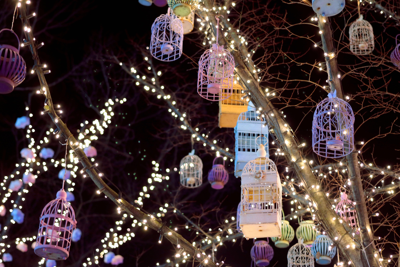 Pæn Gratis billeder : lys, træ, gade, nat, lyn, juledekoration HE24
