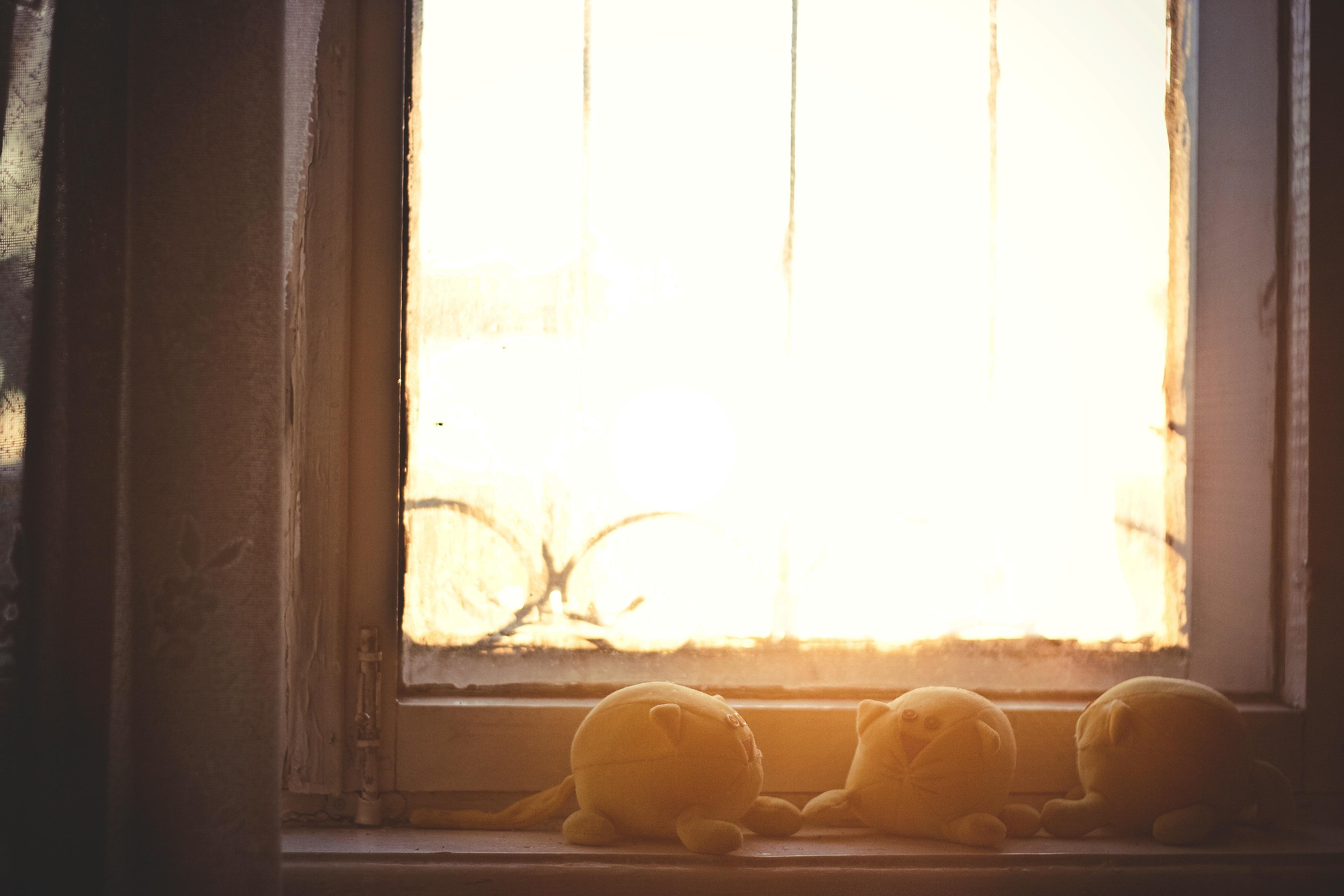 무료 이미지 : 목재, 햇빛, 창문, 벽, 조명, 인테리어 디자인, 사진 ...