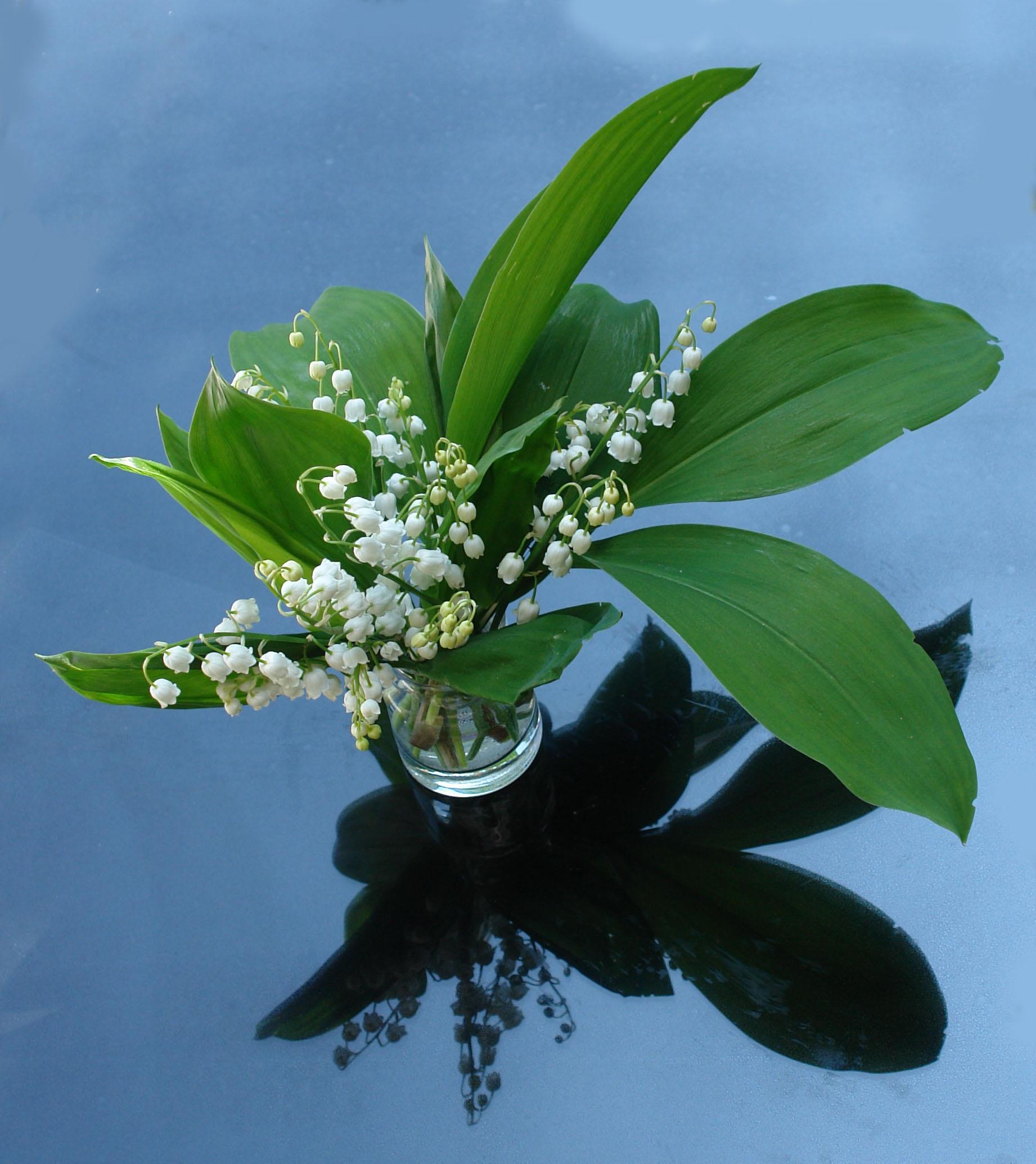 Images Gratuites Muguet Plante Jardin 1842x2070 1371807 Banque D Image Gratuite Pxhere