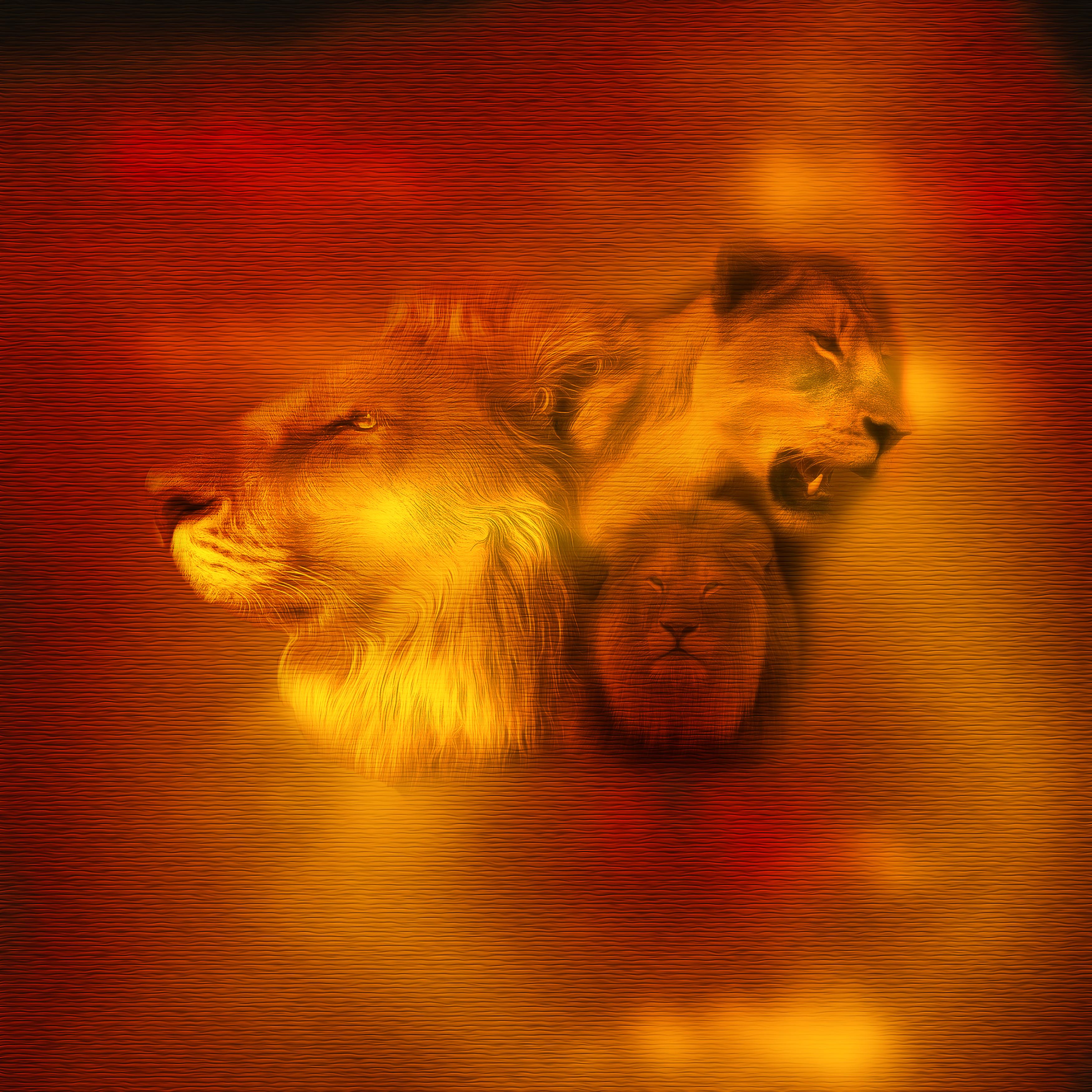 Обои лев, морда, животное. Животные foto 18