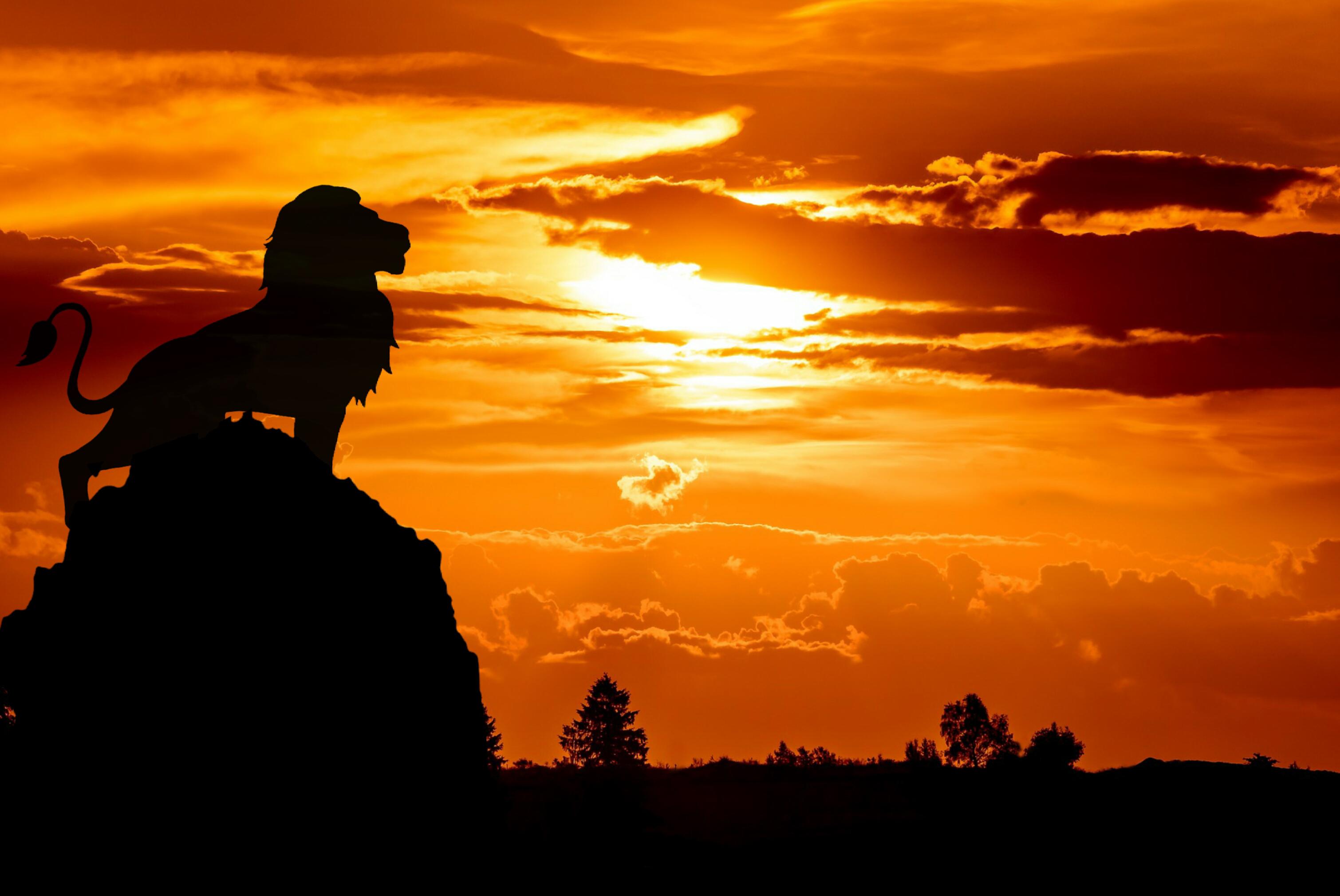 無料画像 ライオン キング アフリカ人 シルエット 単独で