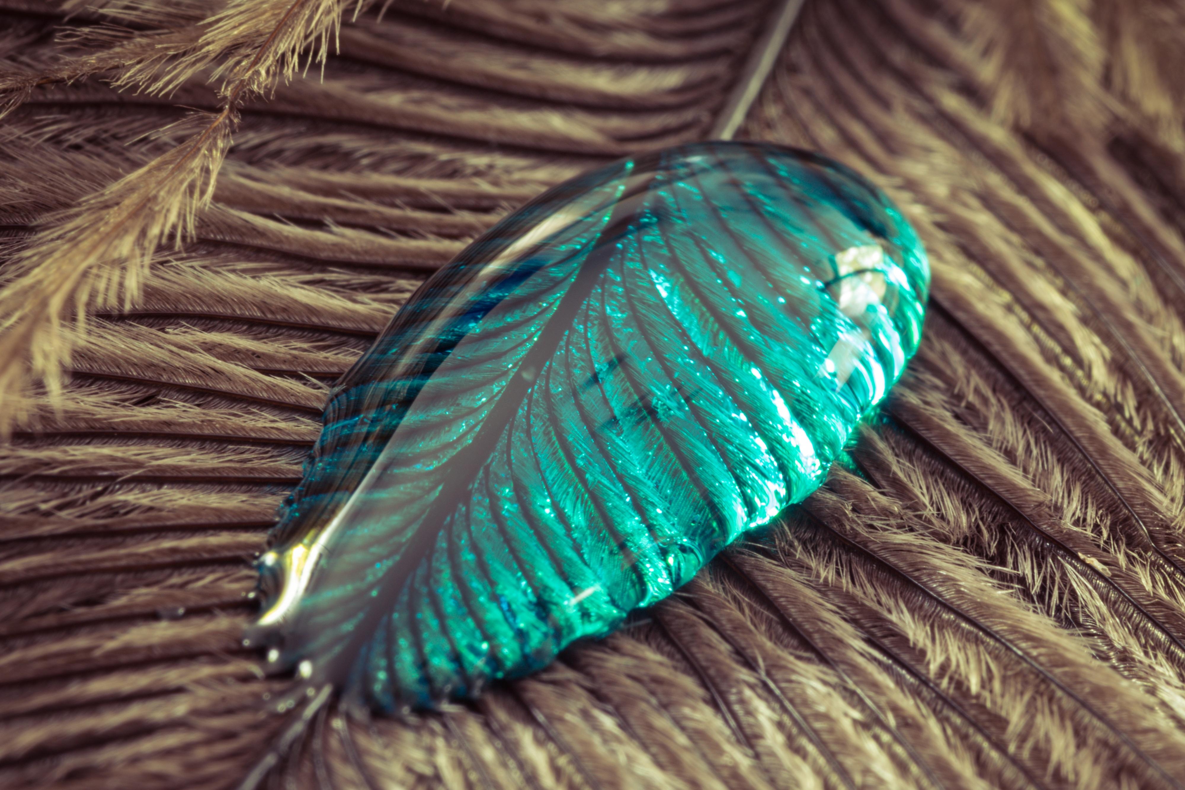 Fotos gratis : líquido, pájaro, ala, textura, hoja, primavera, verde ...