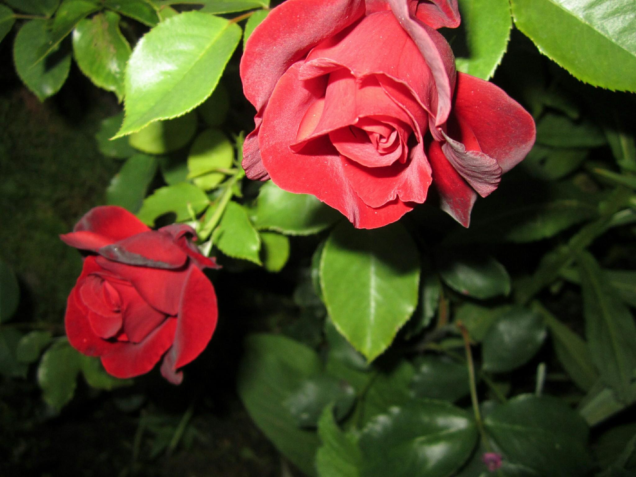 Картинки для аватар цветы