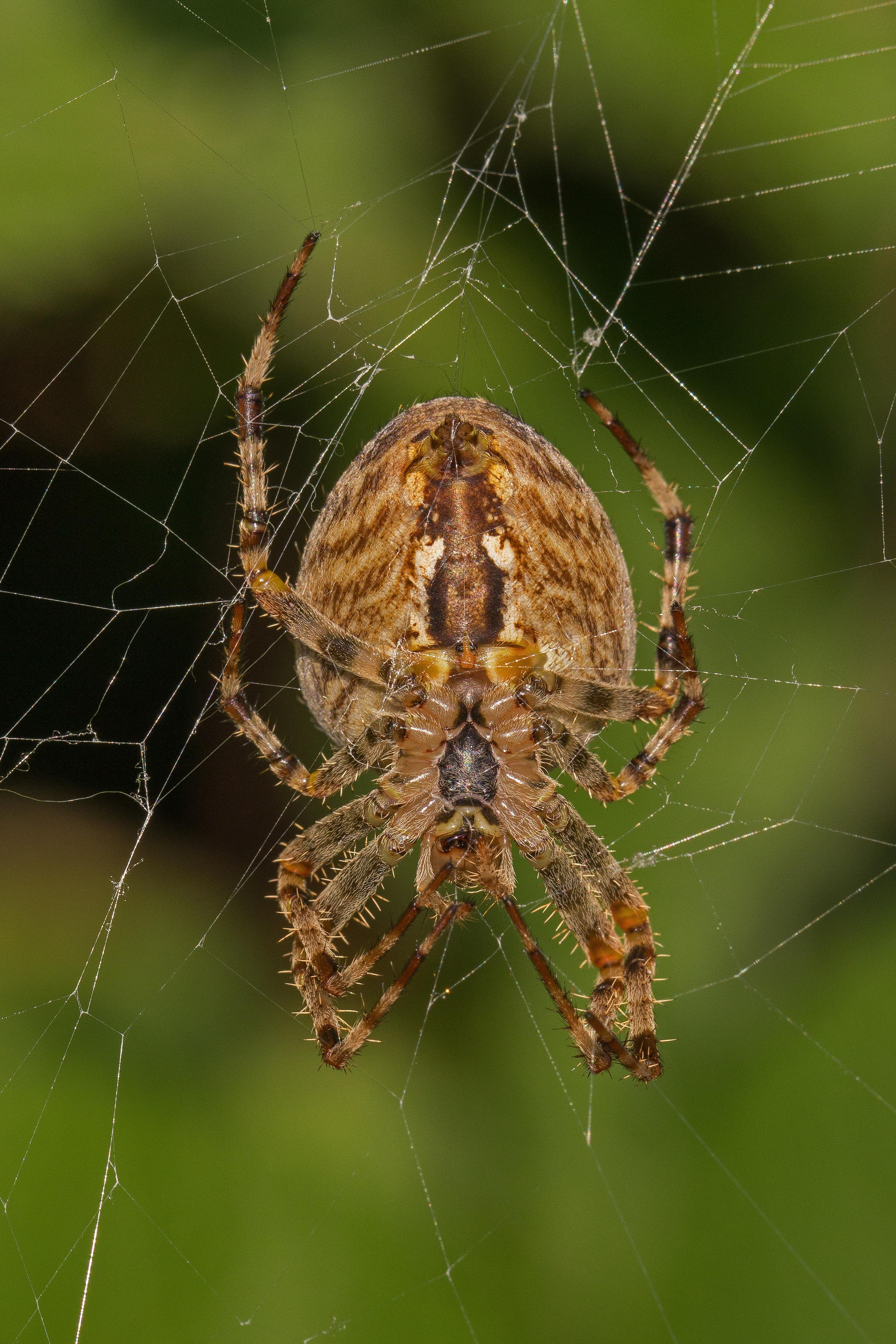 Free Images : fauna, material, invertebrate, spider web, cobweb ...