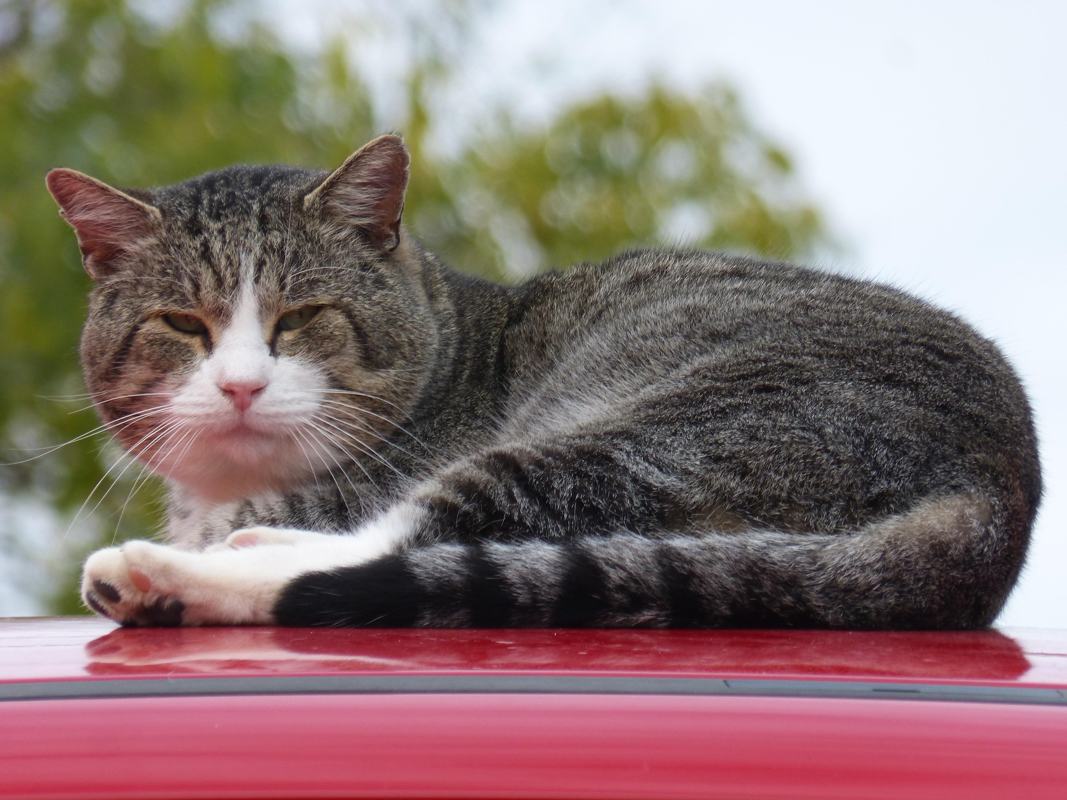 Free male kitten feline rest whiskers vertebrate