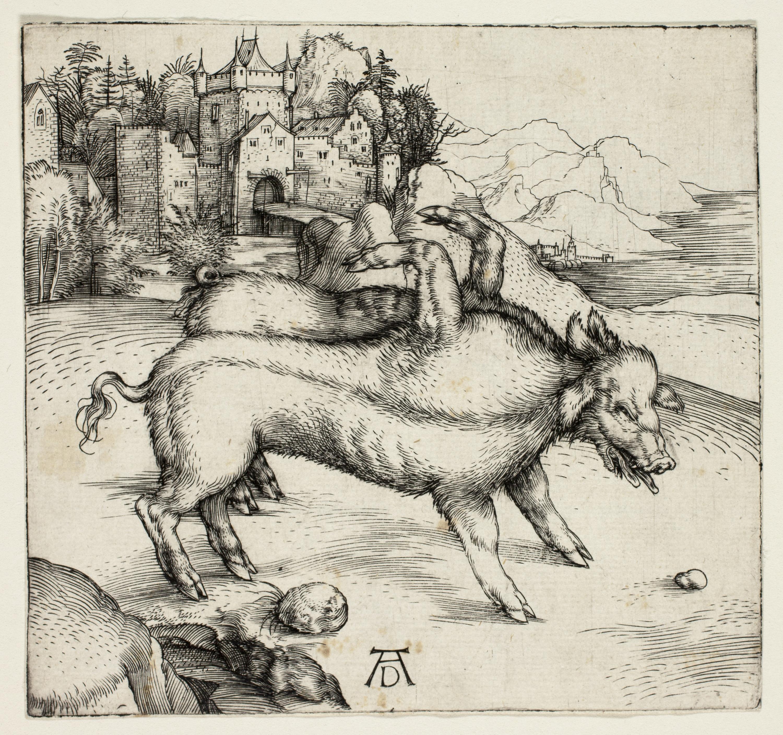Gambar Binatang Menyusui Fauna Kuda Seperti Mamalia