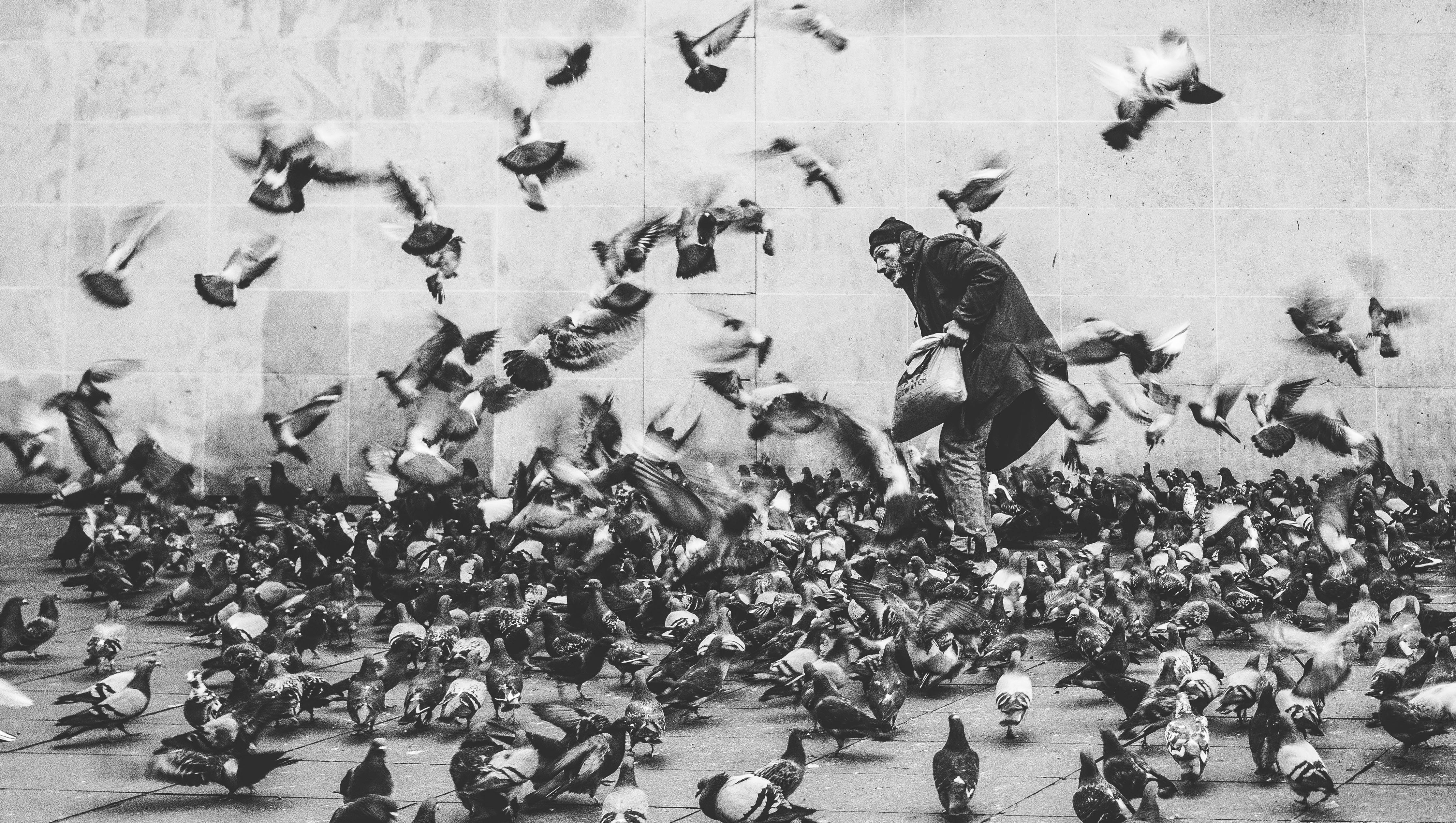 Hình ảnh đàn ông Chim đen Và Trắng Những Người đám