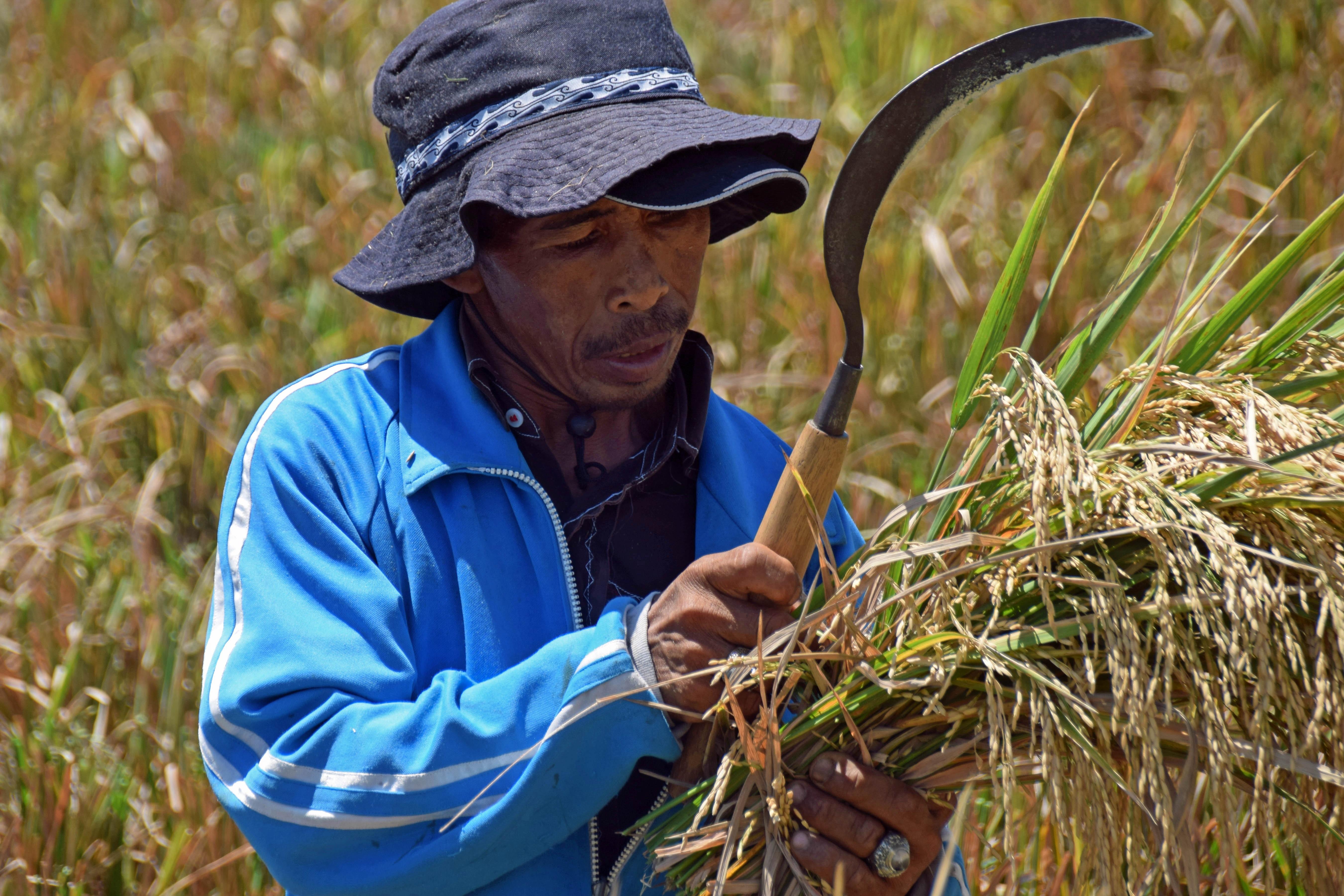 Fotos gratis hombre flor viajar cosecha cultivo - Cortar hierba alta ...