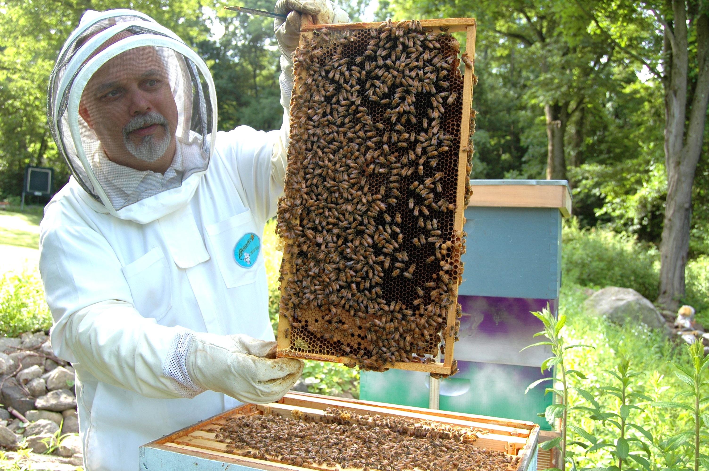 пчеловод улей пчелы картинки после работы