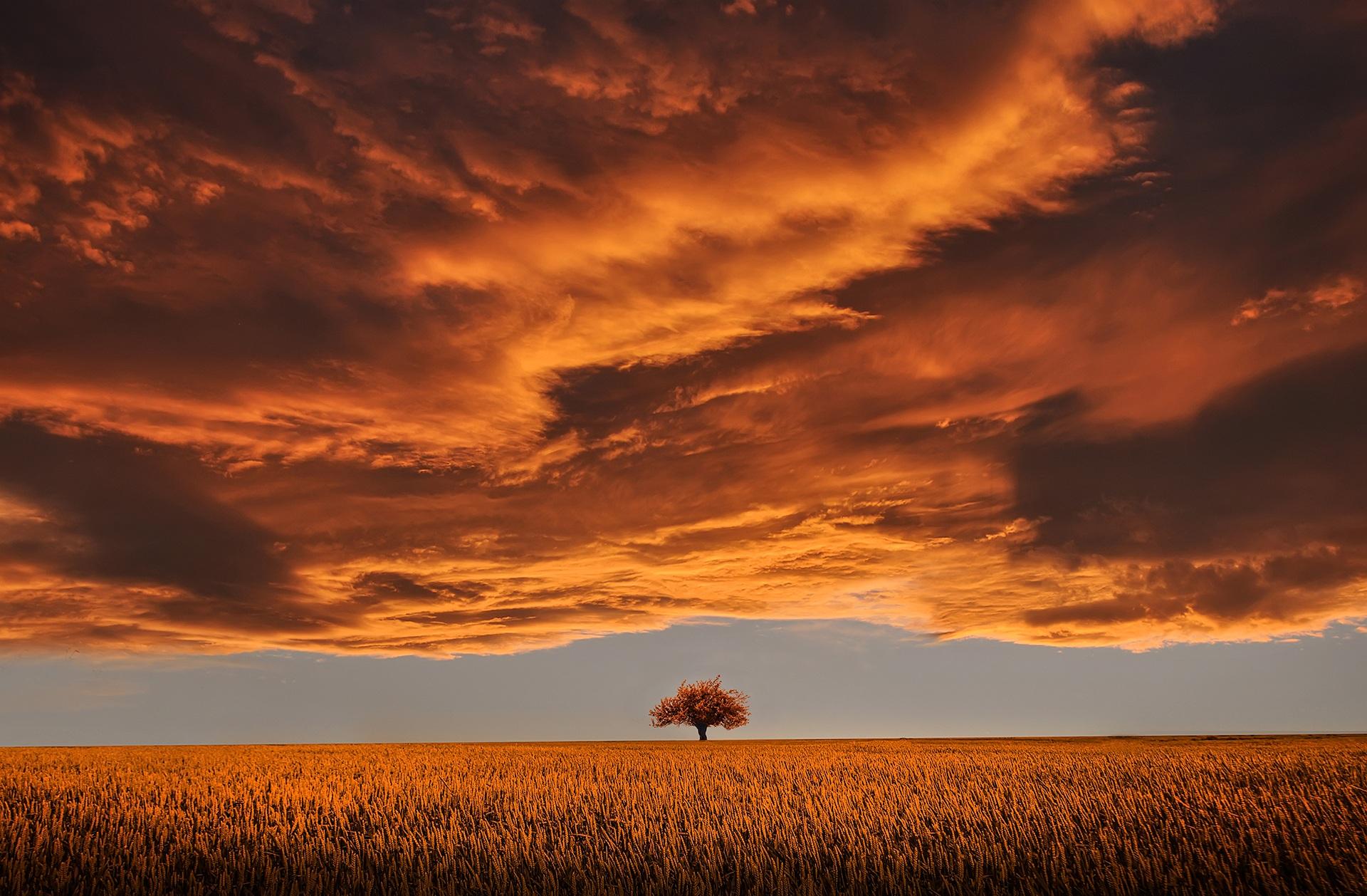 Citate Fotografie Free : Free fotobanka muž krajina strom horizont světlo