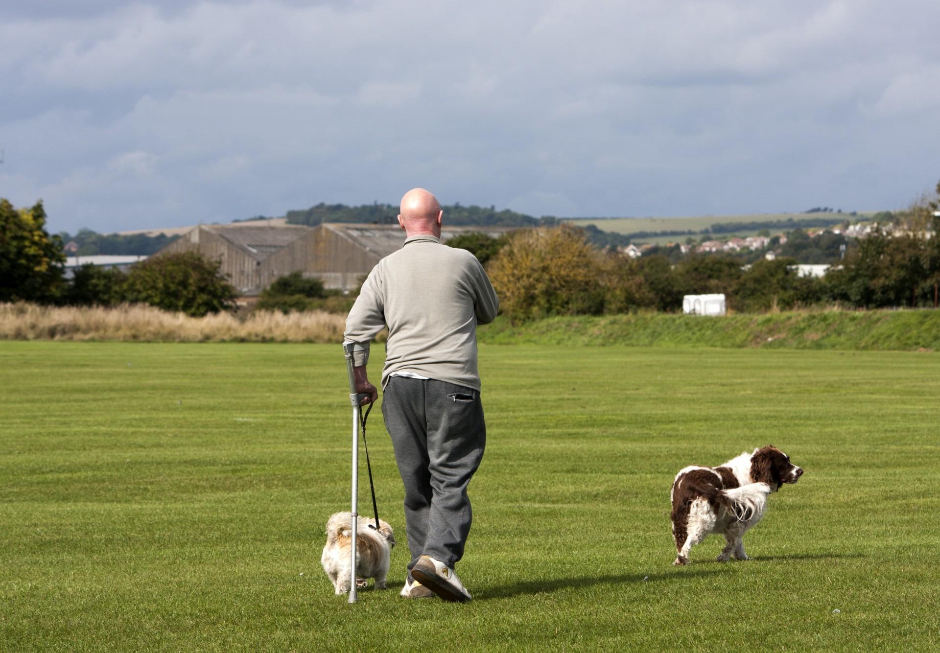 Gambar Manusia Alam Rumput Orang Pedesaan Membelai Hijau Tongkat Walker Berjalan Anjing Hewan Olahraga Spaniel